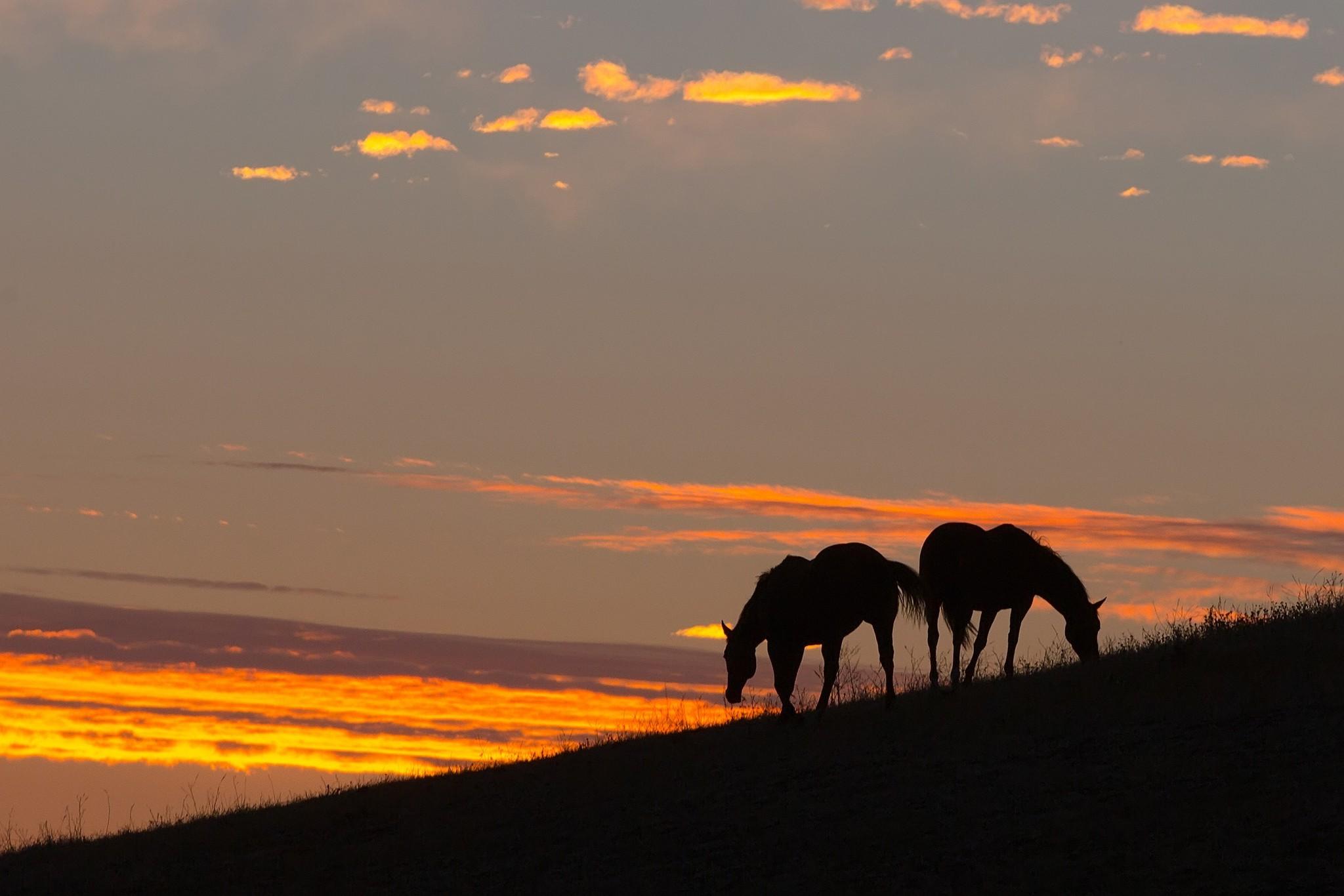 Fond d 39 cran paysage animaux le coucher du soleil cheval silhouette lever du soleil soir - Palpitations le soir au coucher ...