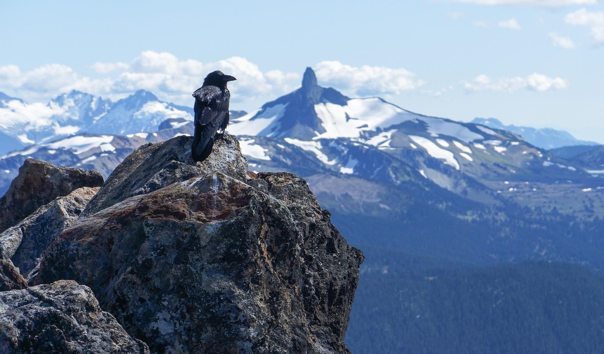 Fondo Escritorio Paisaje Nevada En Cumbre: Fondos De Pantalla : Paisaje, Aves, Animales, Nieve