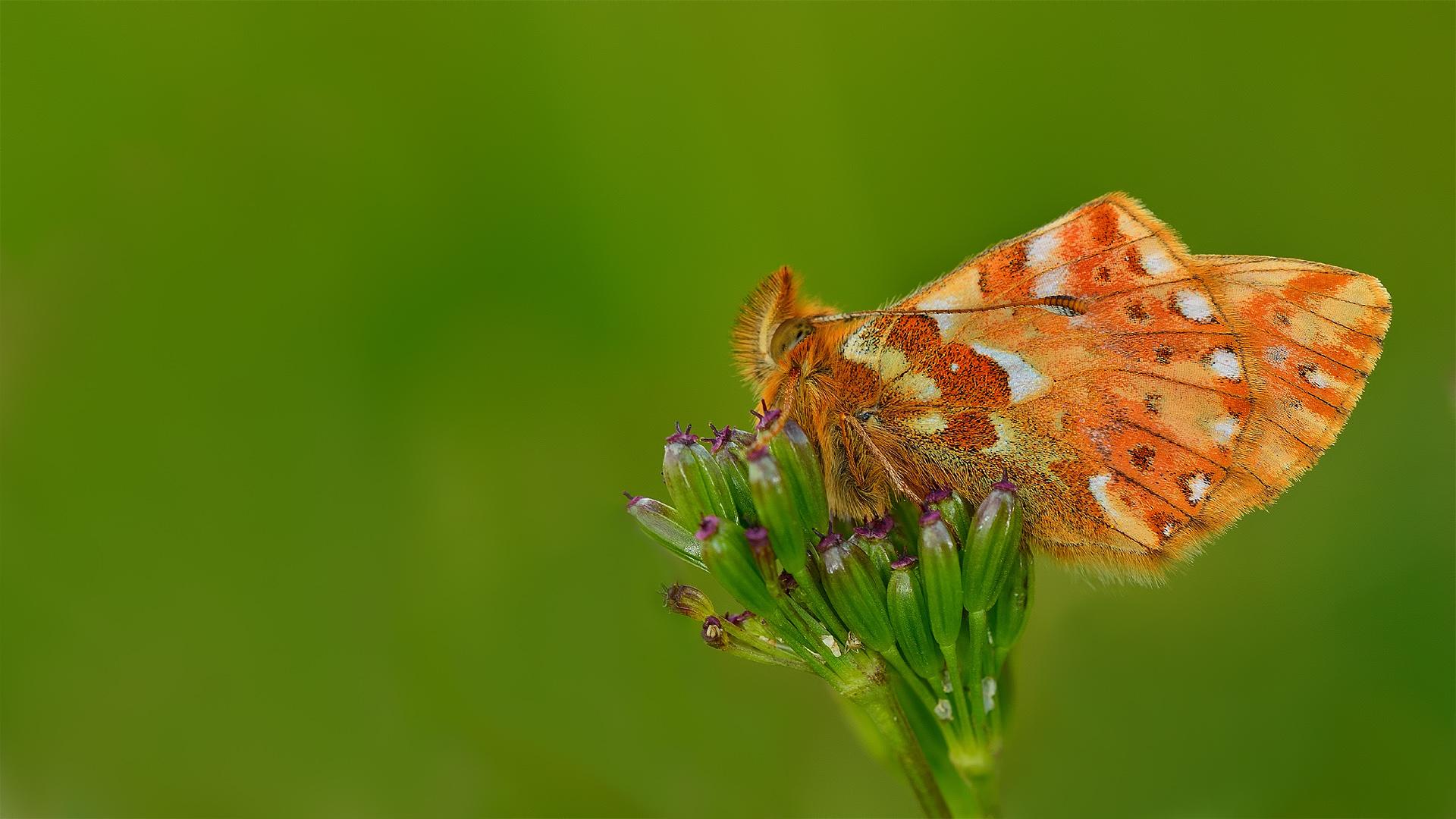Fond d 39 cran paysage color la nature minimalisme - Modele papillon ...