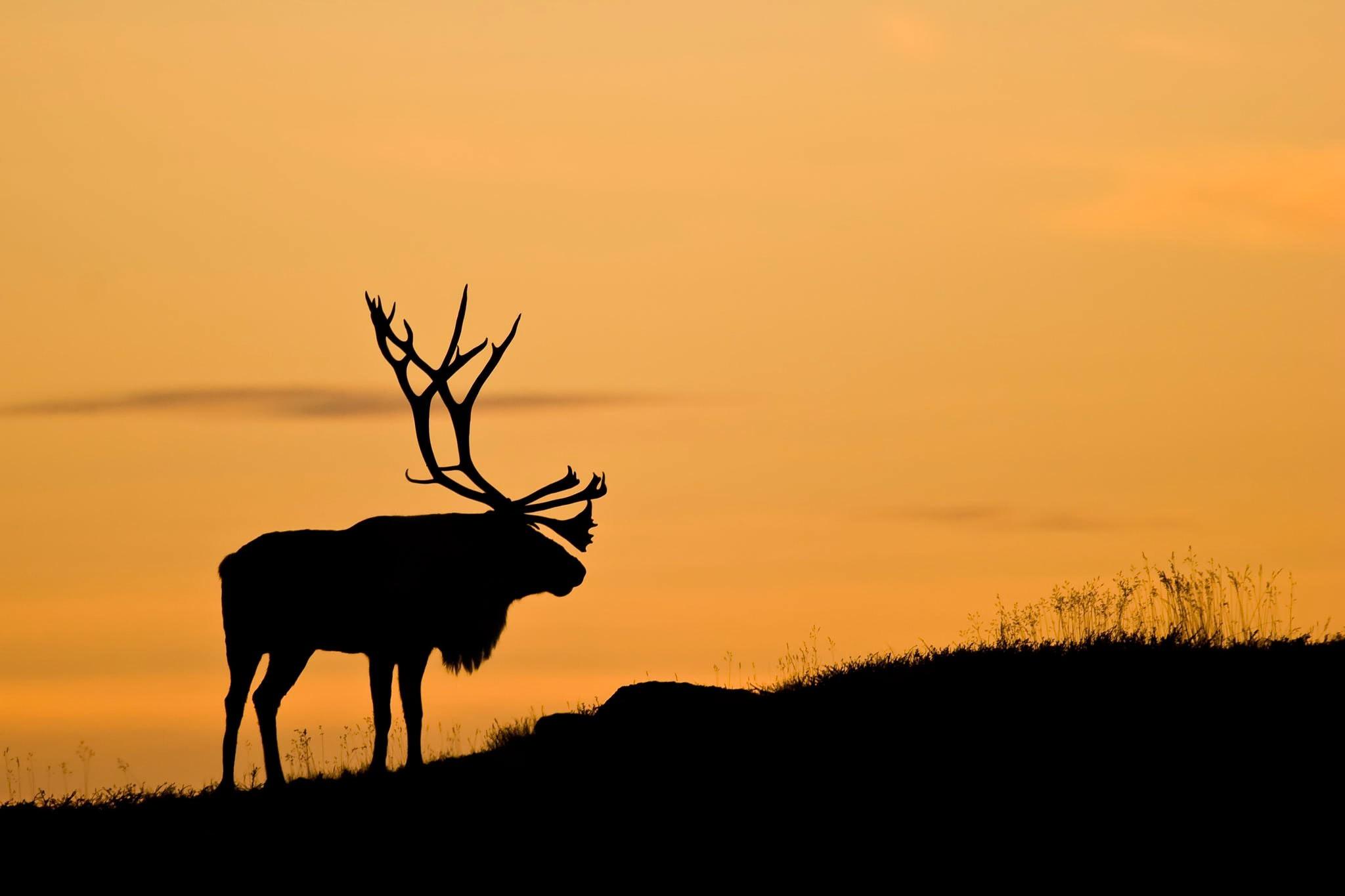 Landscape Deer Animals Sunset Nature Silhouette Sunrise Morning Wildlife Antlers Dawn Grassland Plain Fauna Mammal Prairie