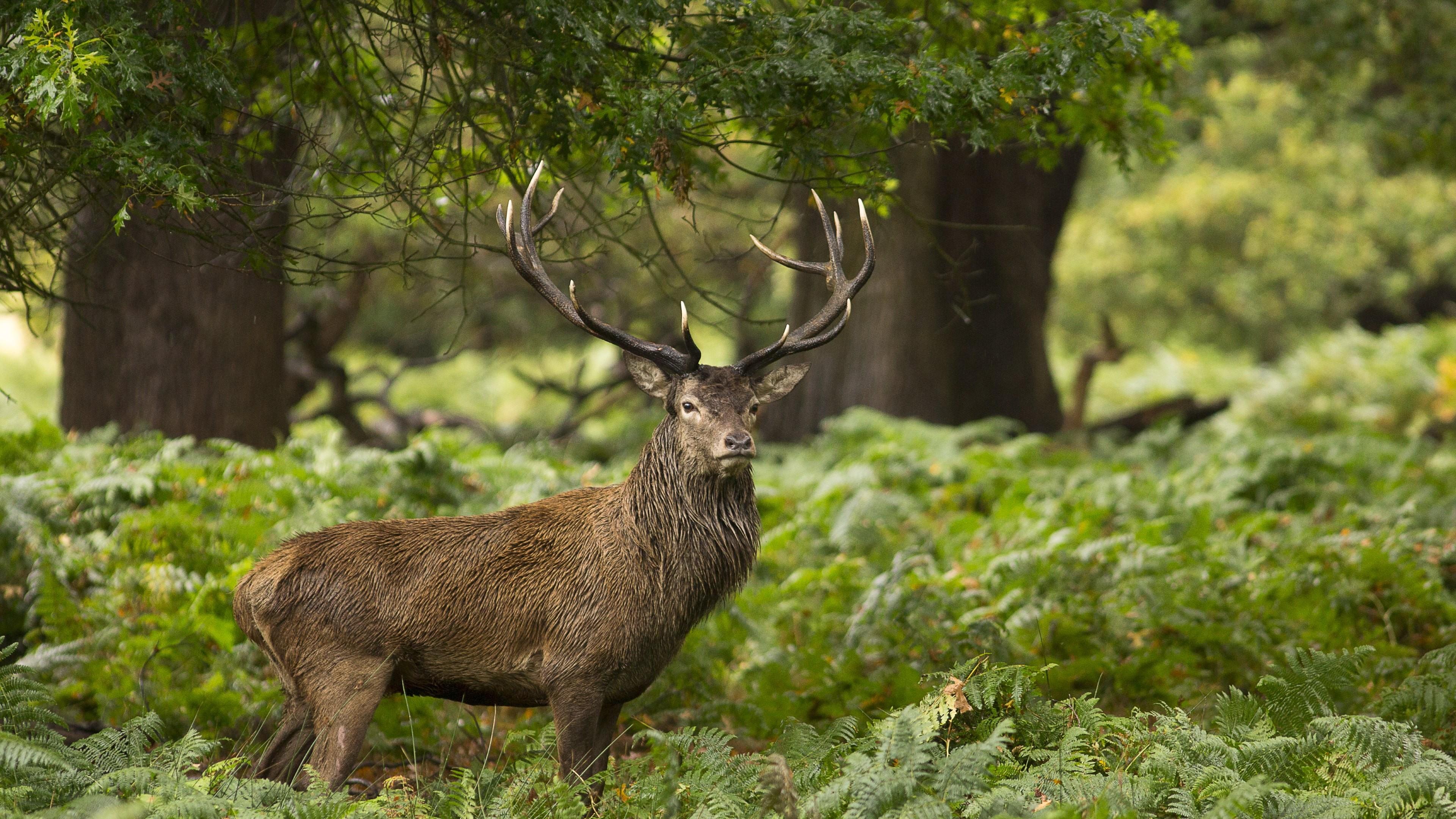 95 Gambar Pemandangan Fauna Gratis