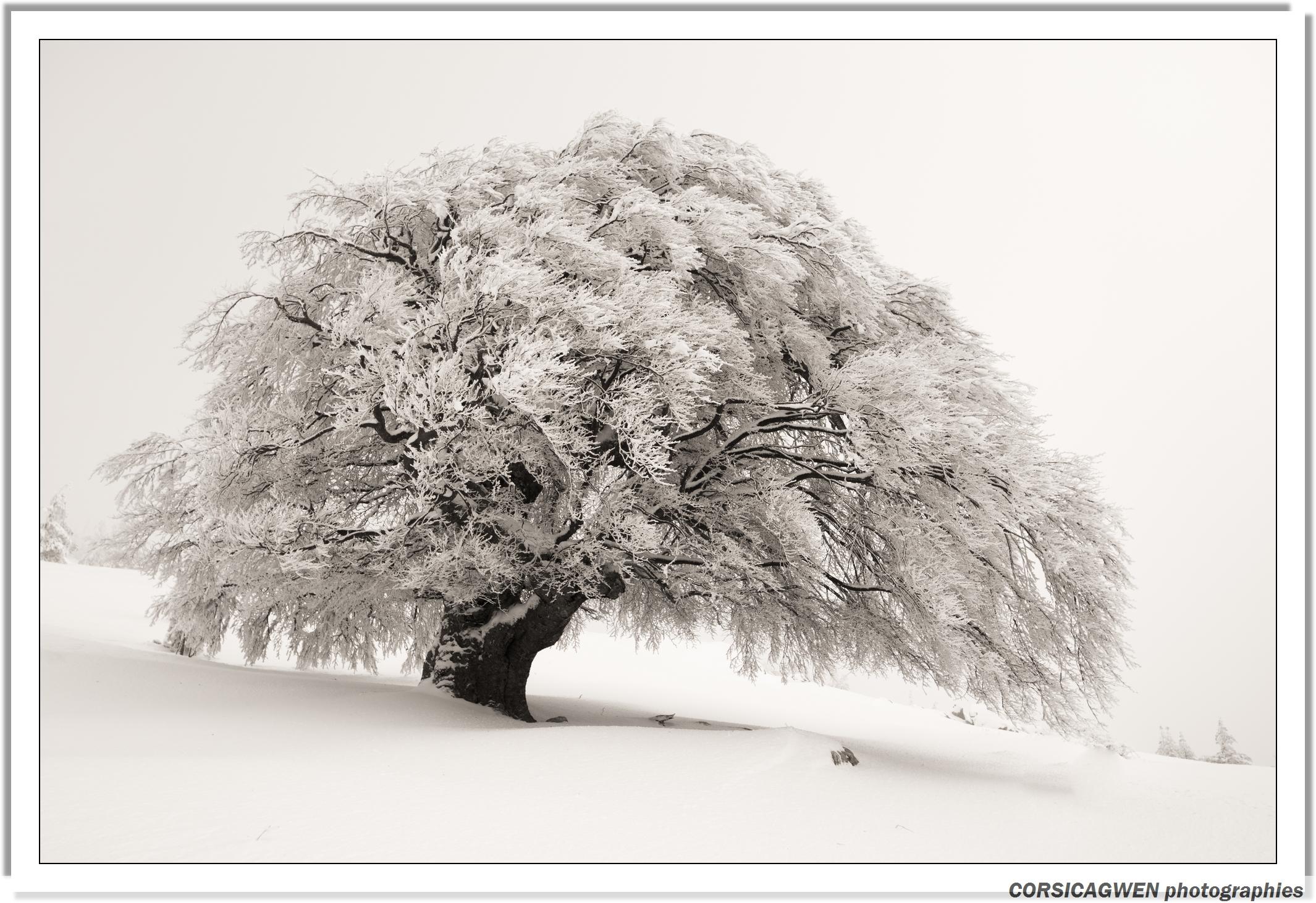 fond d 39 cran paysage dessin monochrome neige hiver branche gel paysage neige arbre. Black Bedroom Furniture Sets. Home Design Ideas