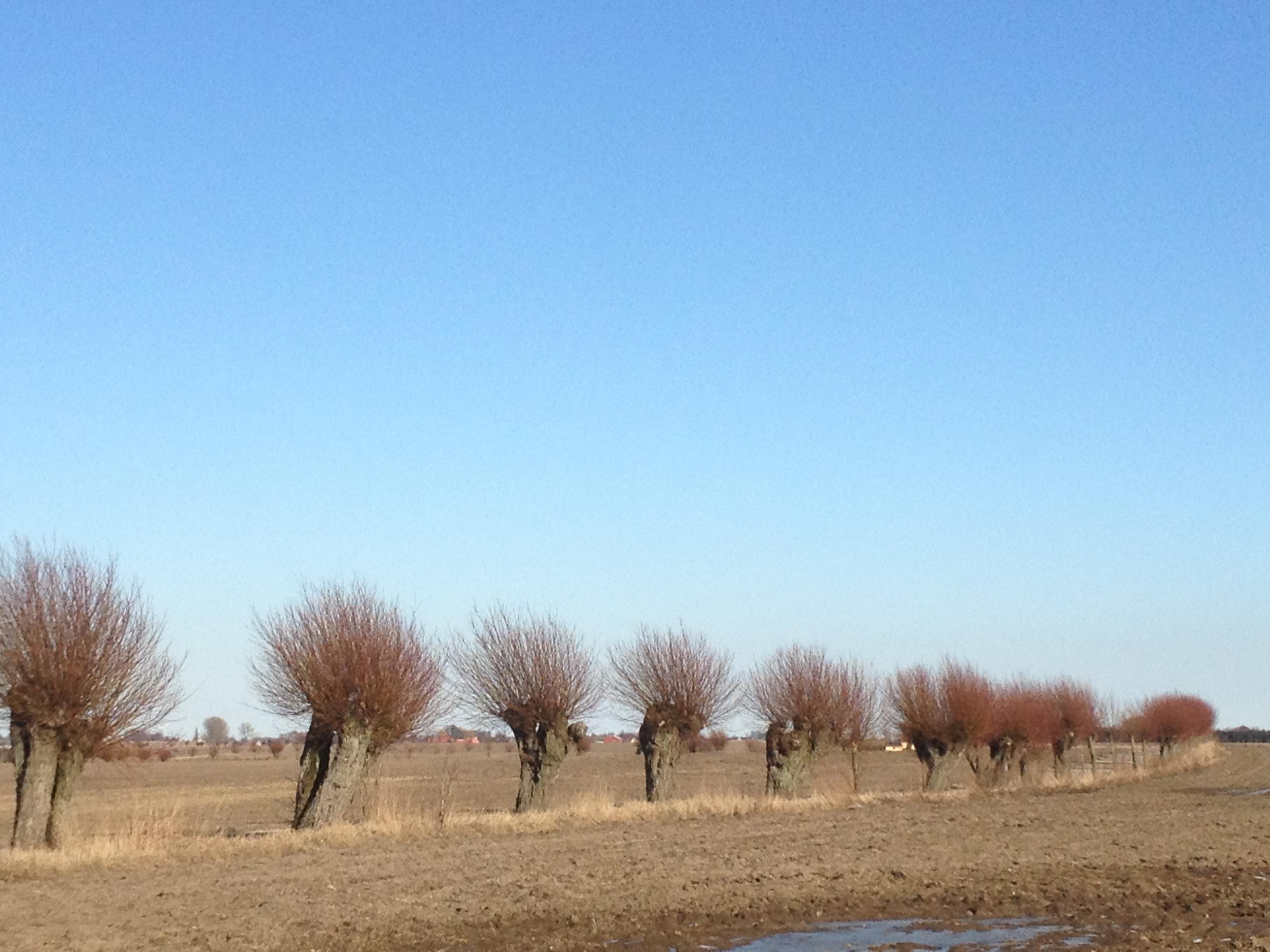 デスクトップ壁紙 風景 フィールド ファーム 地平線 草原 木
