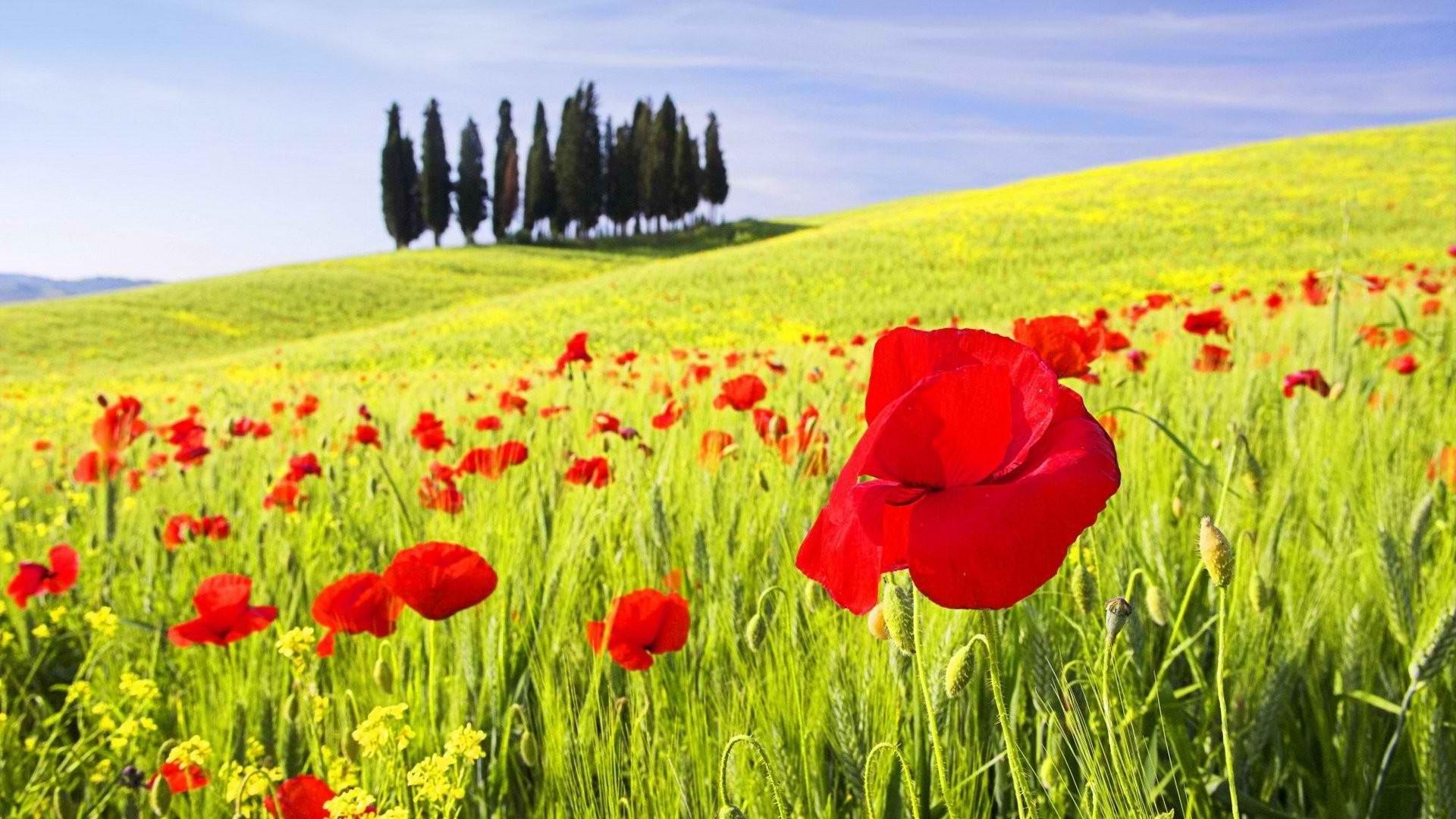 Fondos de pantalla paisaje flores c sped campo for Immagini full hd 1920x1080