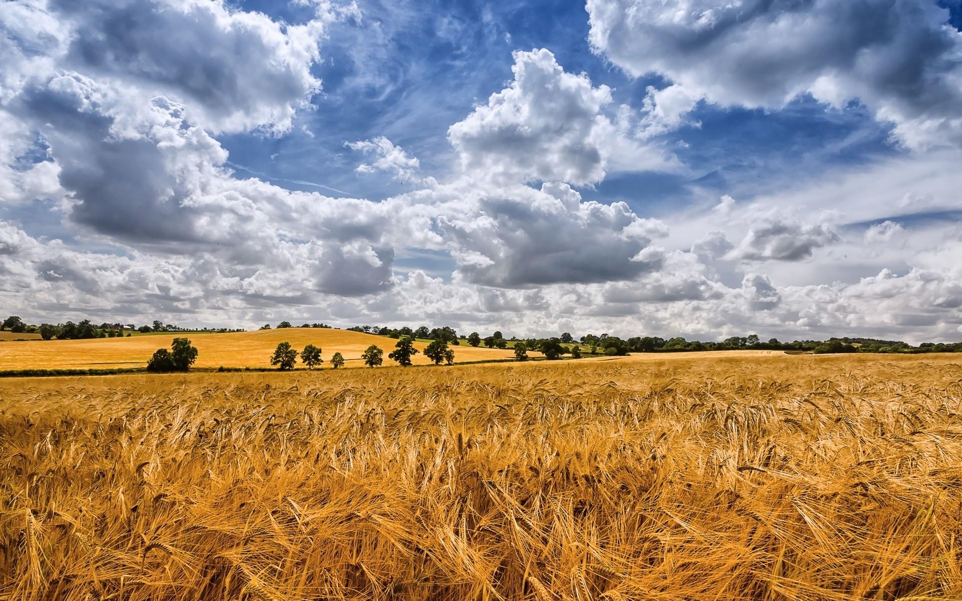 Небо пшеница картинки