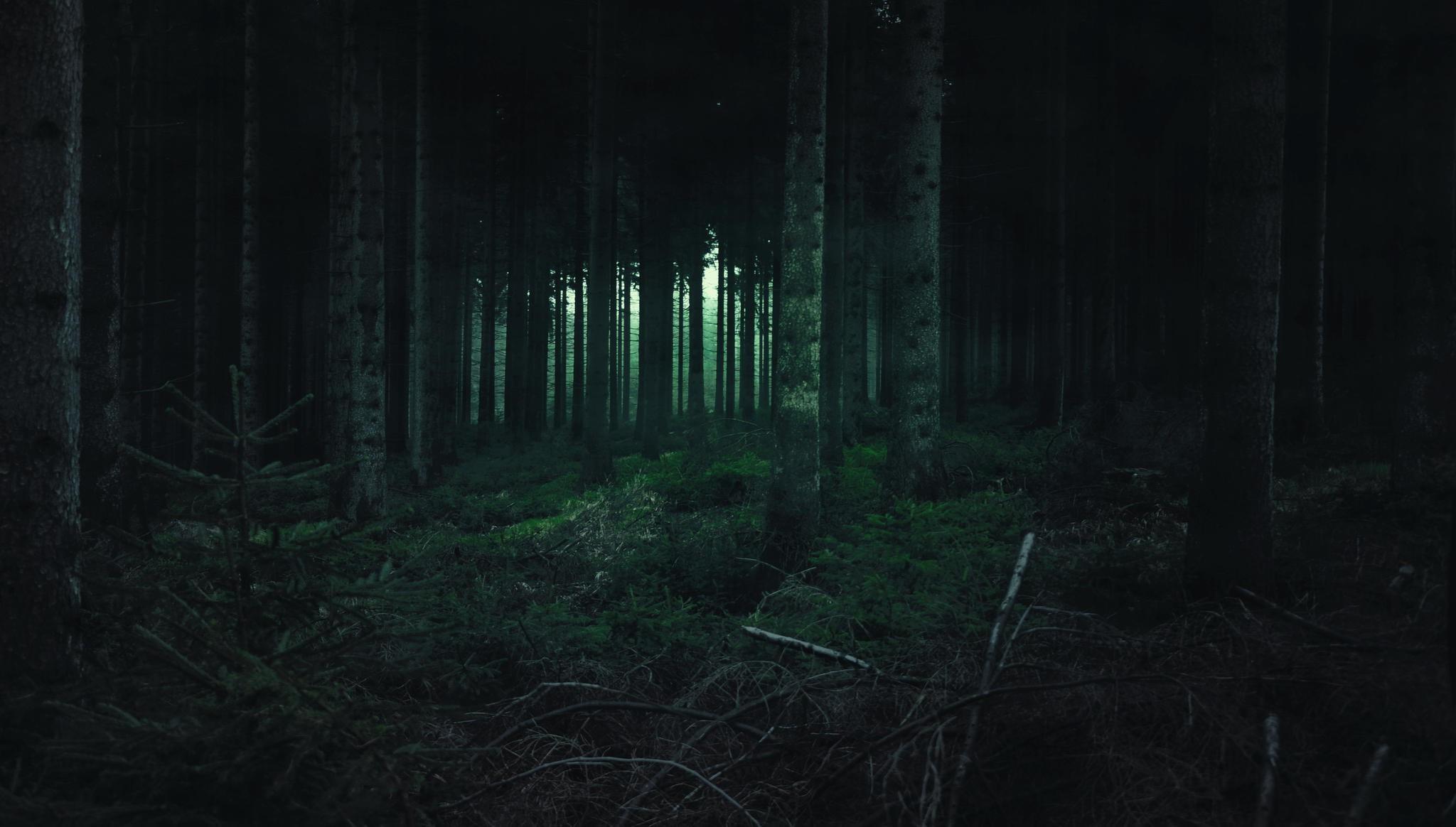Wallpaper Landscape Night Nature Grass Atmosphere