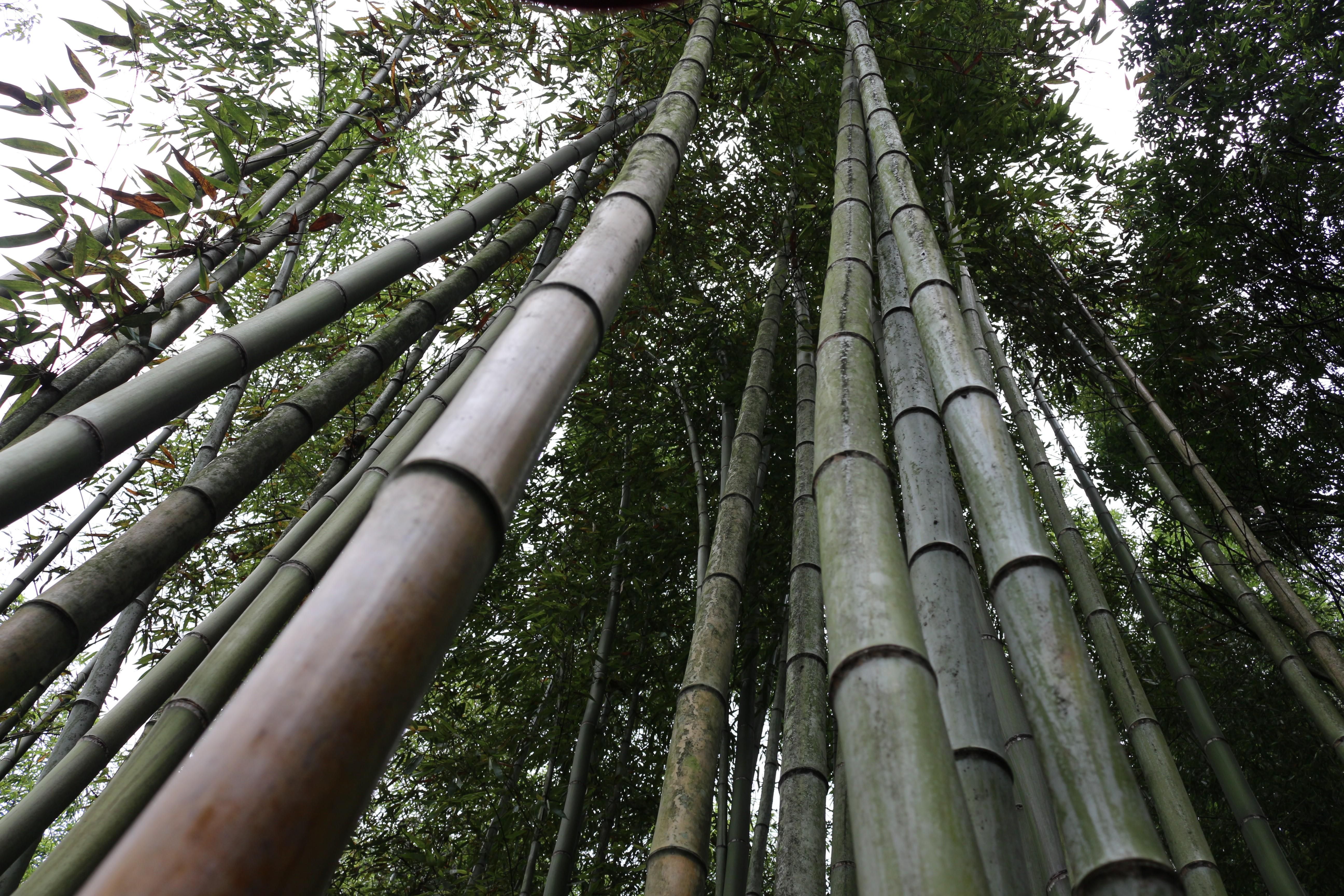hintergrundbilder landschaft wald ast bambus. Black Bedroom Furniture Sets. Home Design Ideas