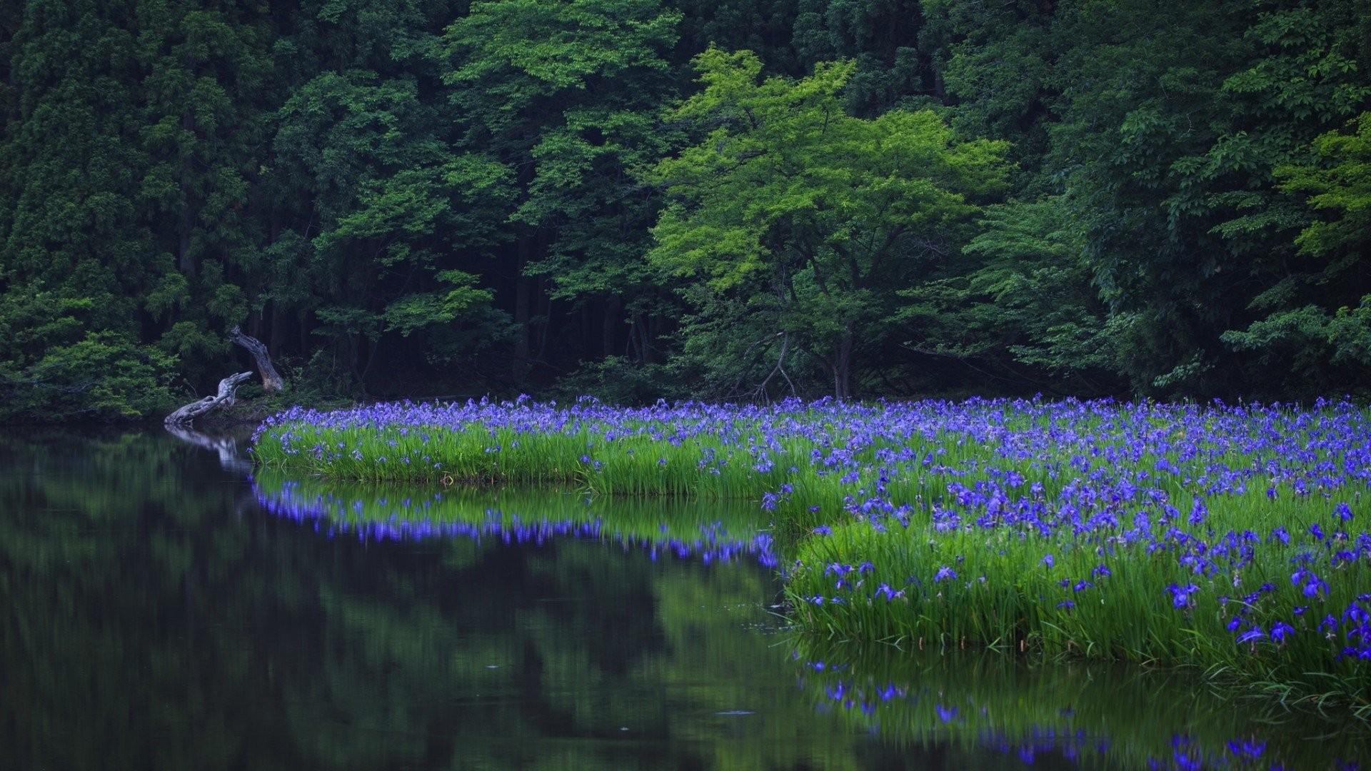 Fond D Ecran Paysage Foret Lac La Nature Champ Fleurs Bleues