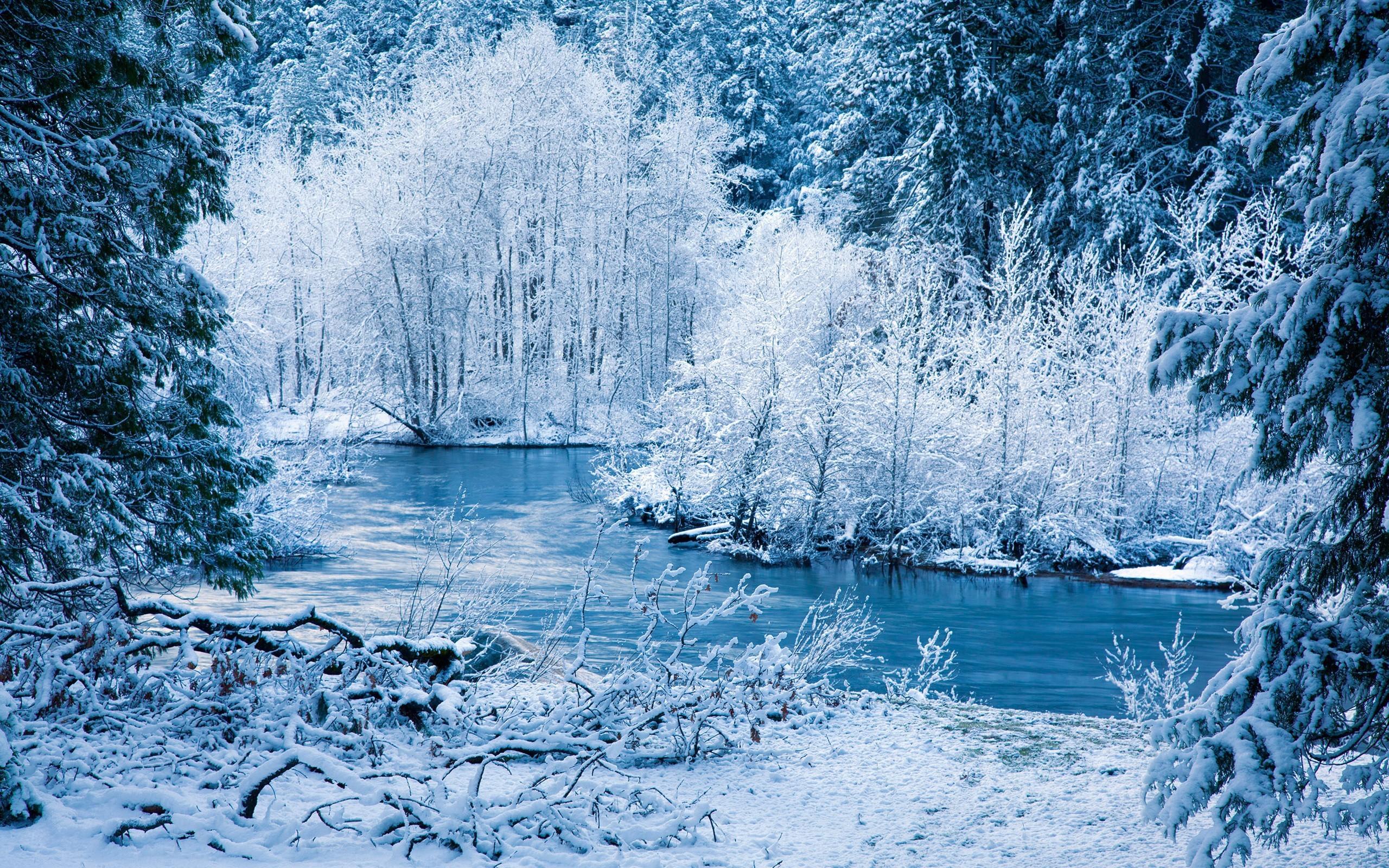 фотографии с зимними пейзажами фото птичку сих