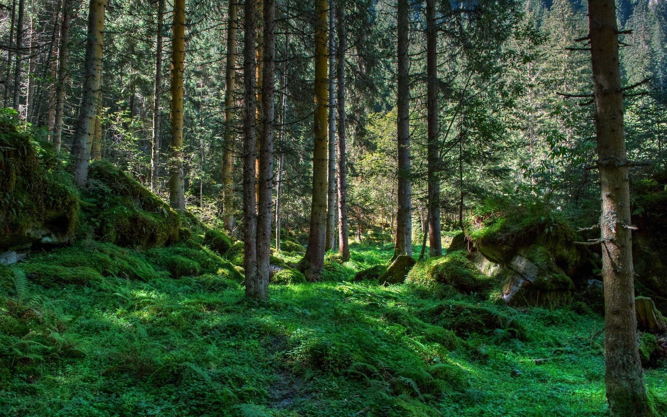 фото обои на рабочий стол природа лес меня встретите некоторые