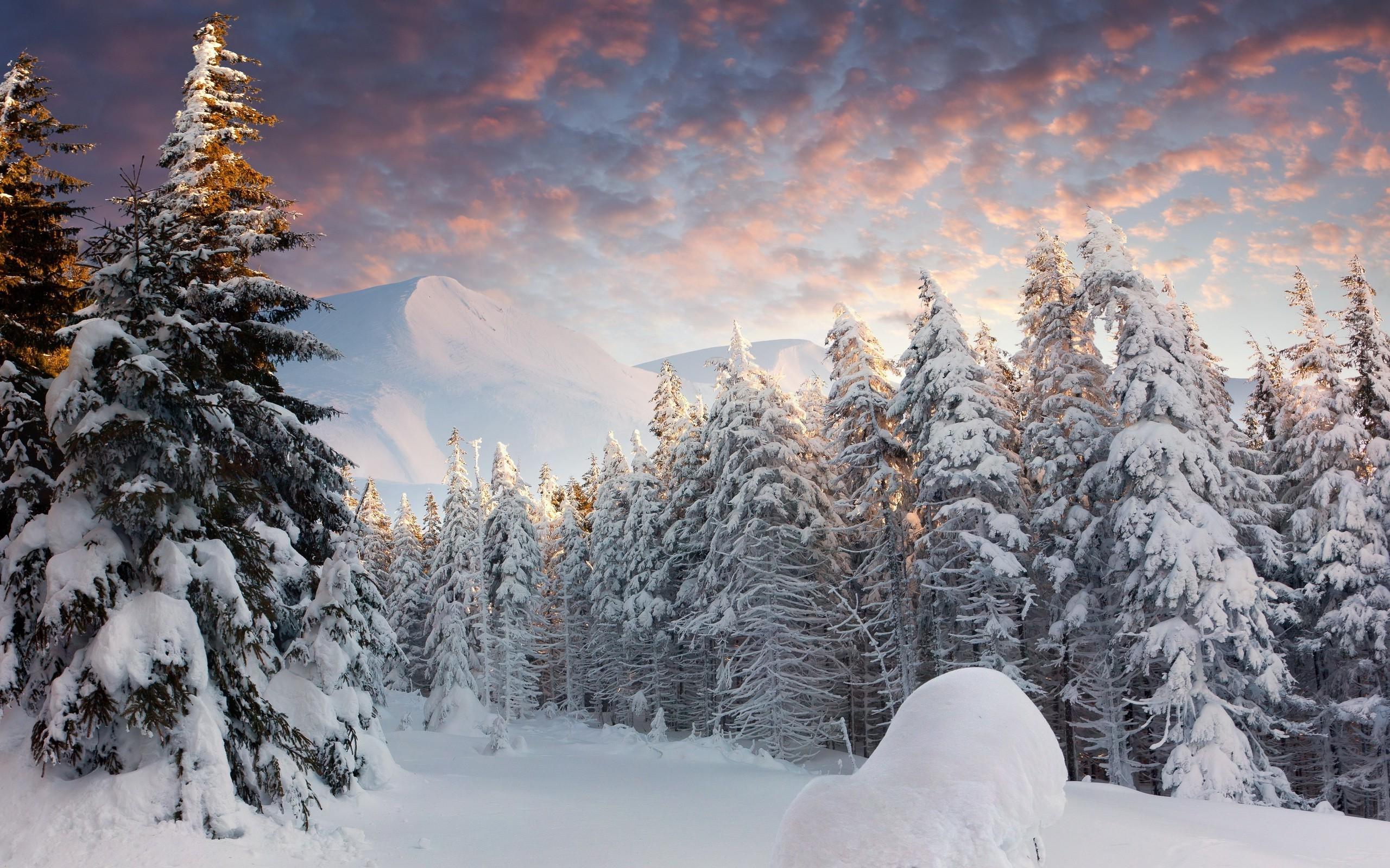 Зима в лесу на рабочий стол обои отличного качества