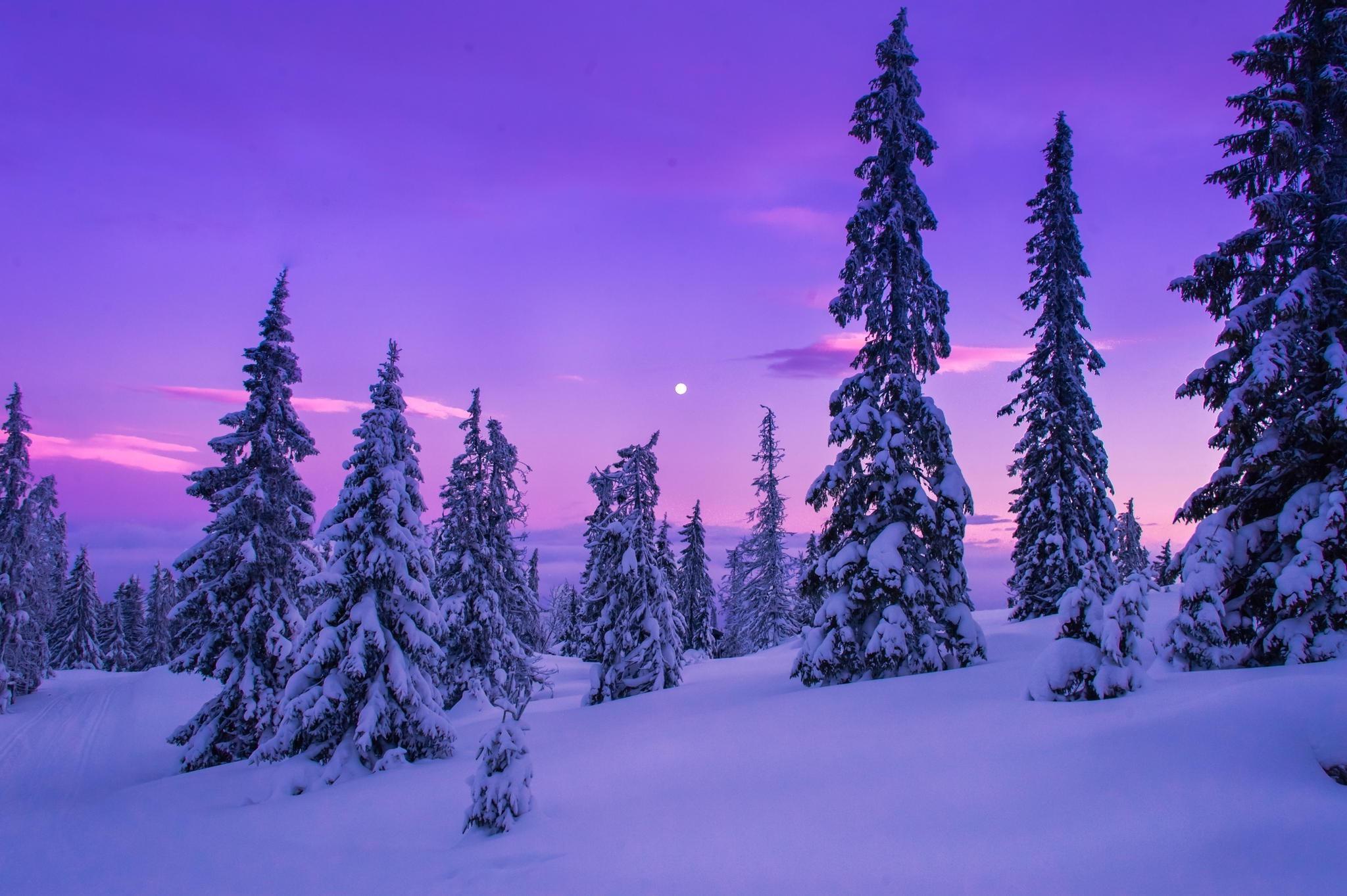 Wallpaper landscape forest nature snow winter - Wallpaper hd nature winter ...