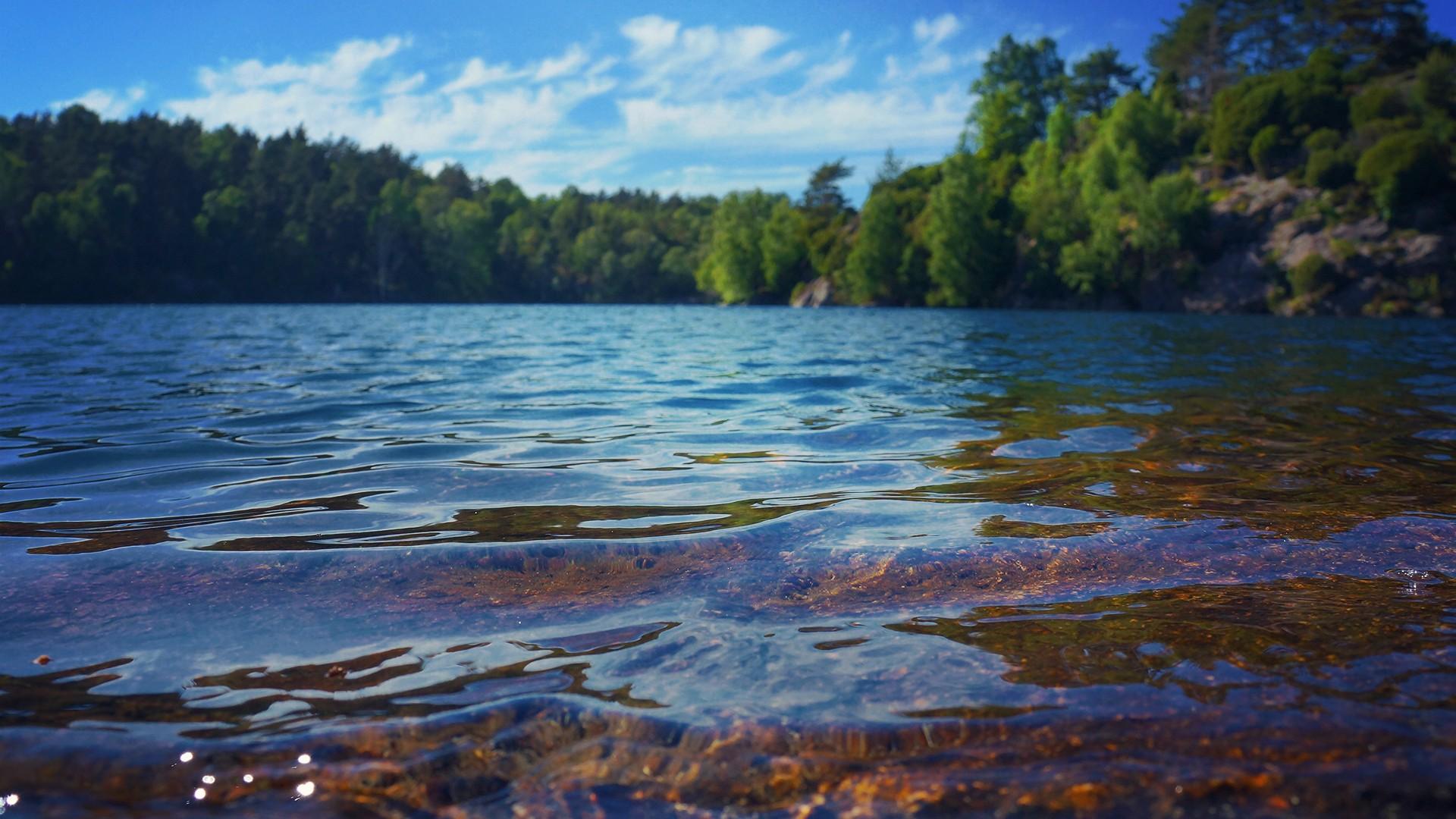 озеро лес река берег картинки
