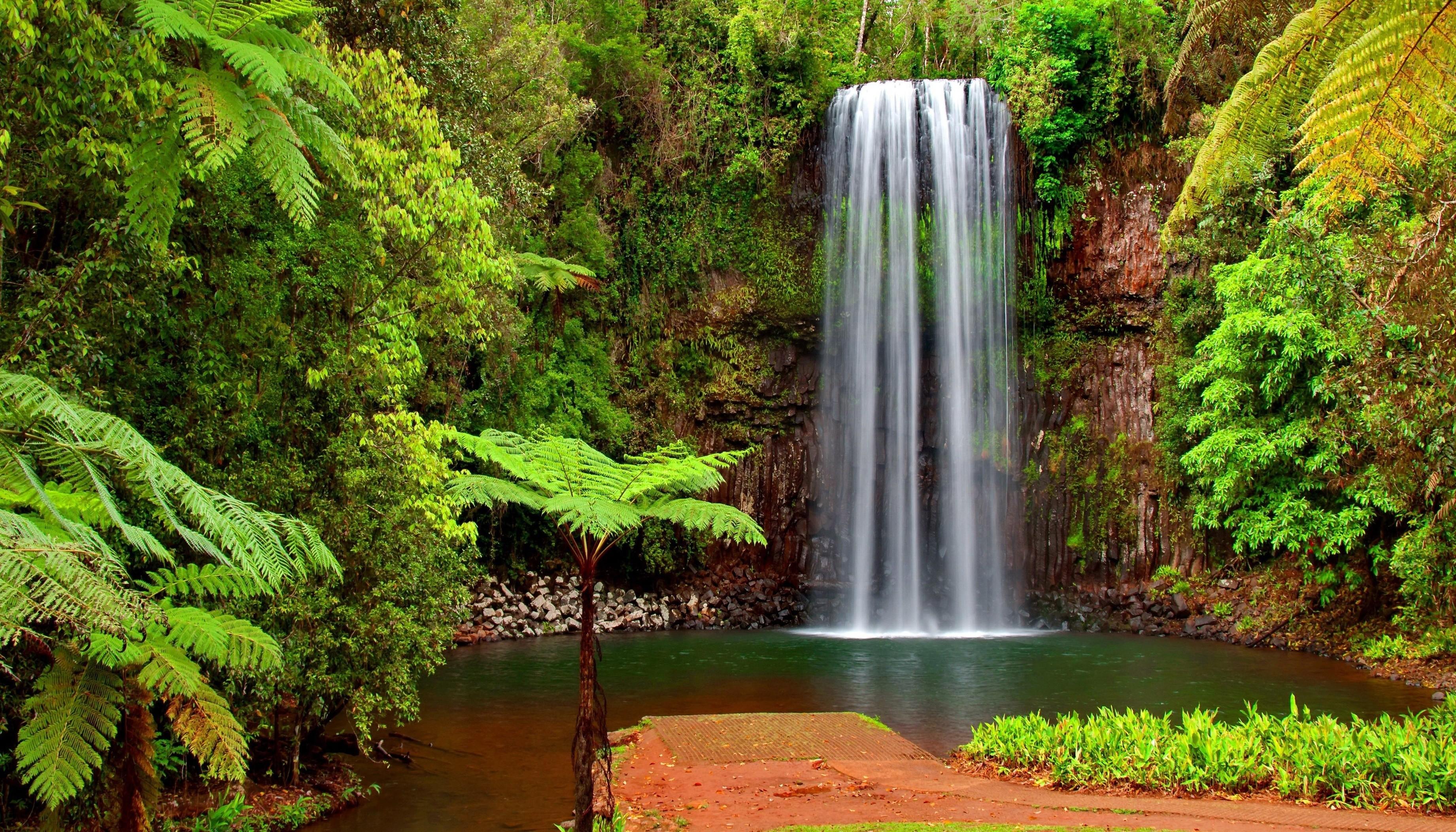 Fondos de pantalla paisaje cascada verde selva rbol for Cascada agua jardin