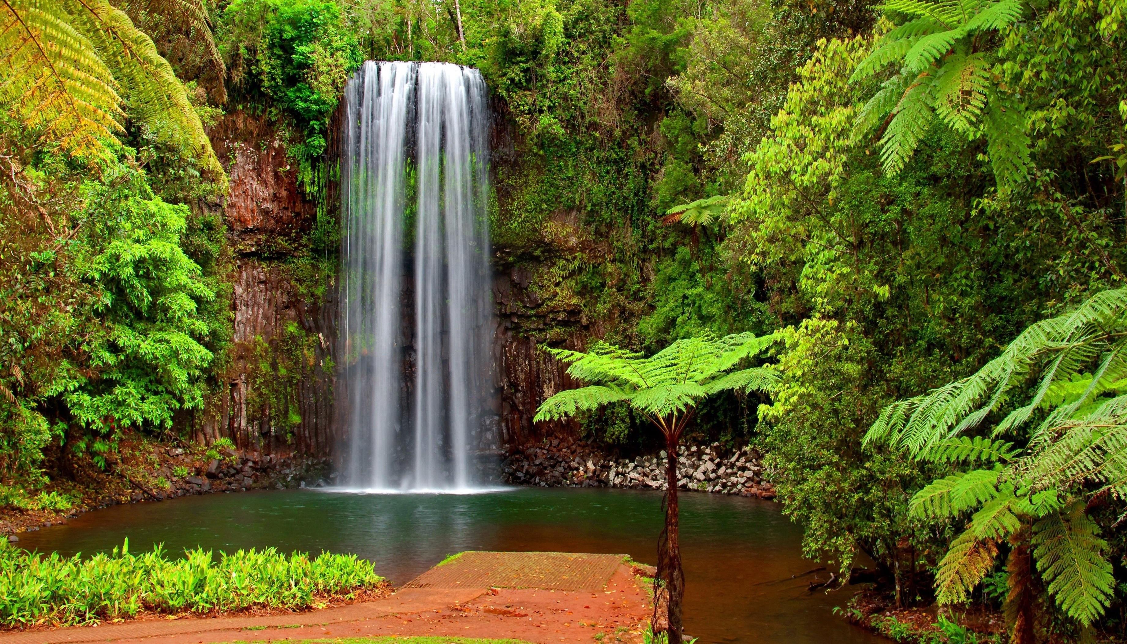 Fondos de pantalla paisaje bosque cascada verde - Cascada de jardin ...