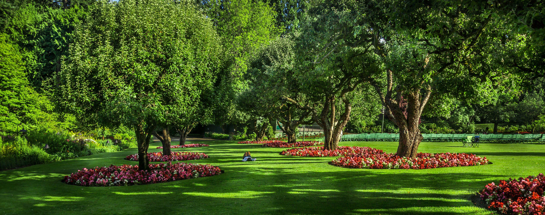 Wallpaper : landscape, nature, love, grass, park, green, Sony