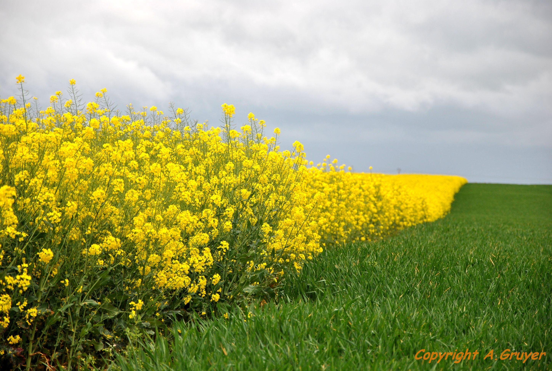 Fond d cran de printemps paysage for Paysage vert