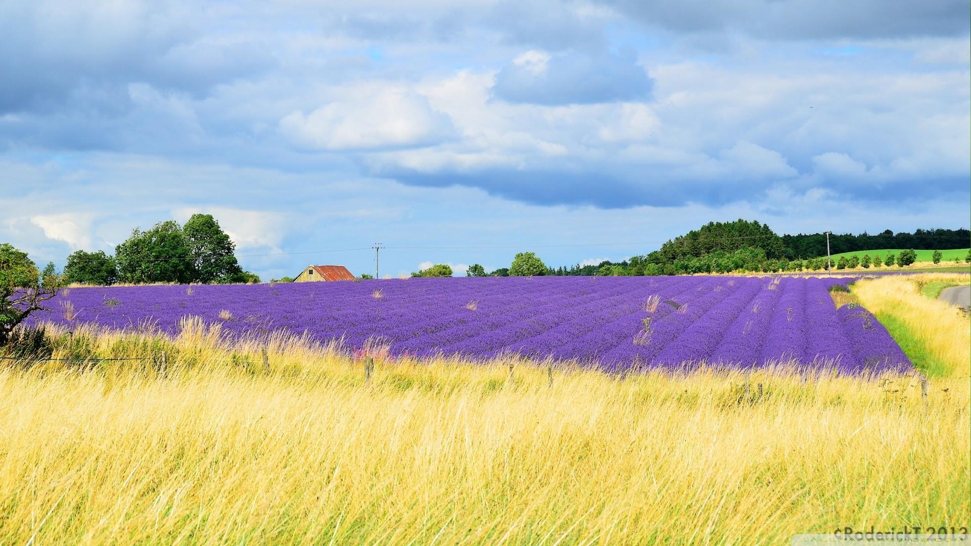 Wallpaper Landscape Hill Sky Clouds Farm Horizon Lavender