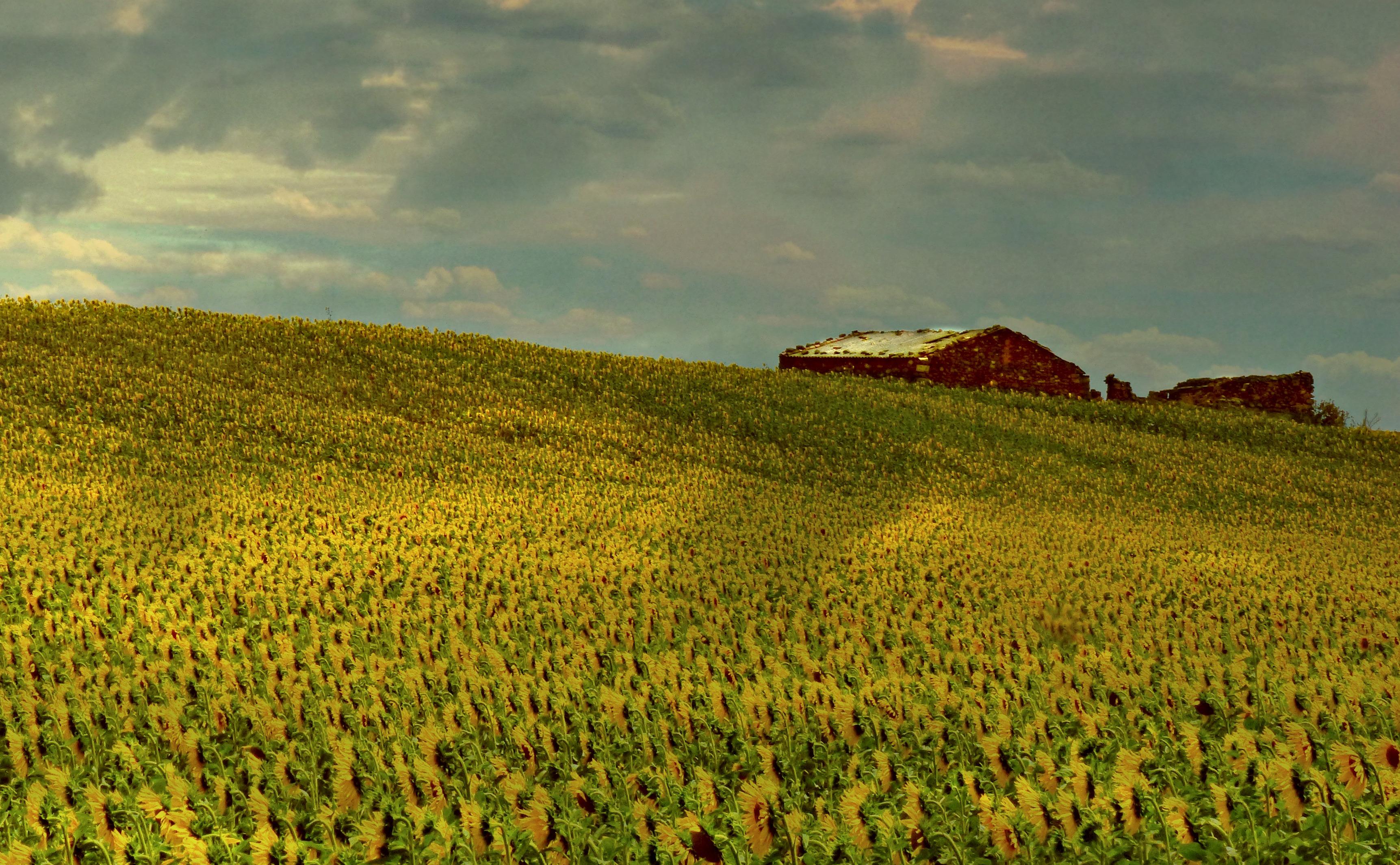 Wallpaper Landscape Hill Sky Field Farm Spain Campo