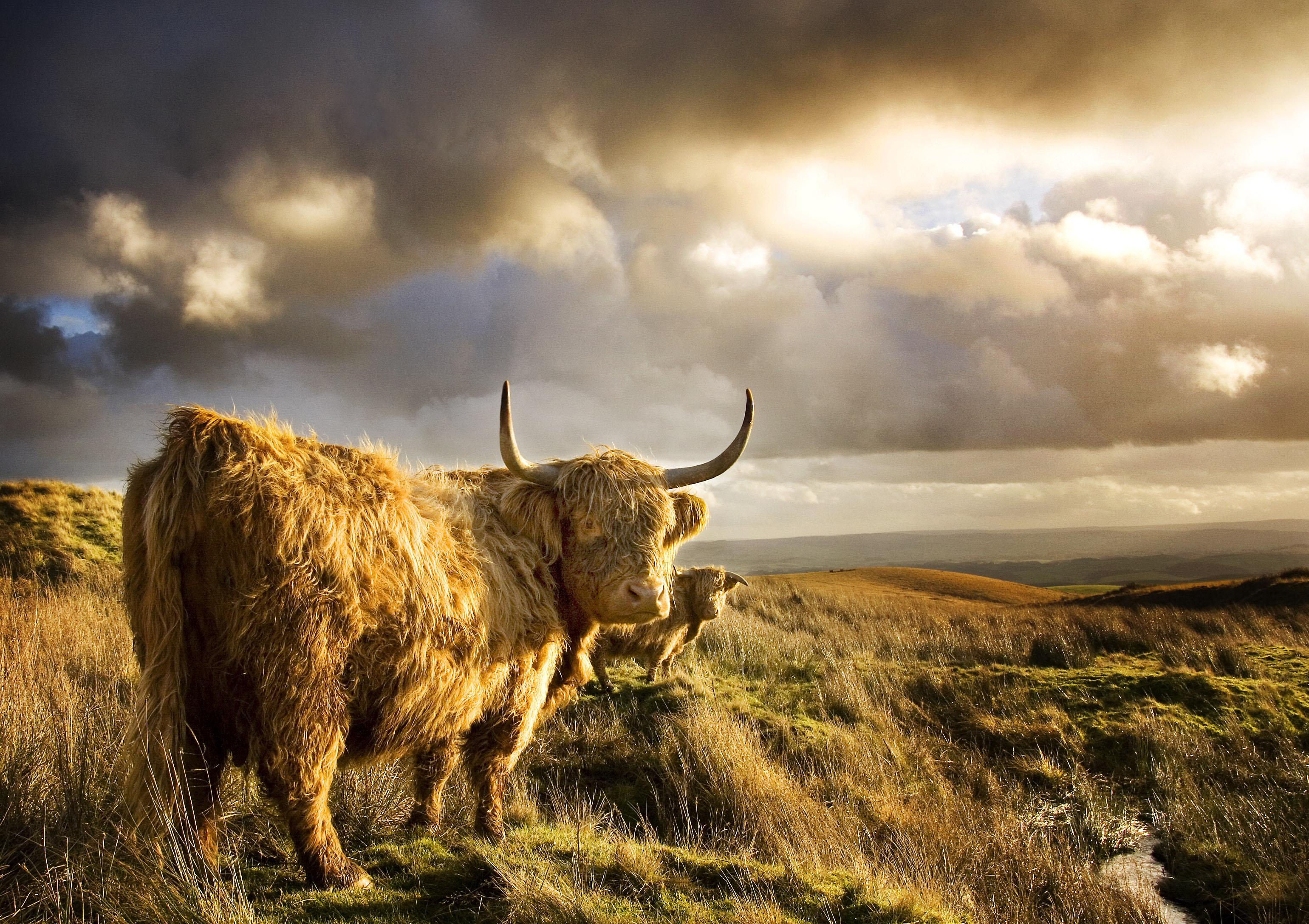 Wallpaper landscape hill grass sky field horns wildlife yorkshire tundra steppe - Highland park wallpaper ...