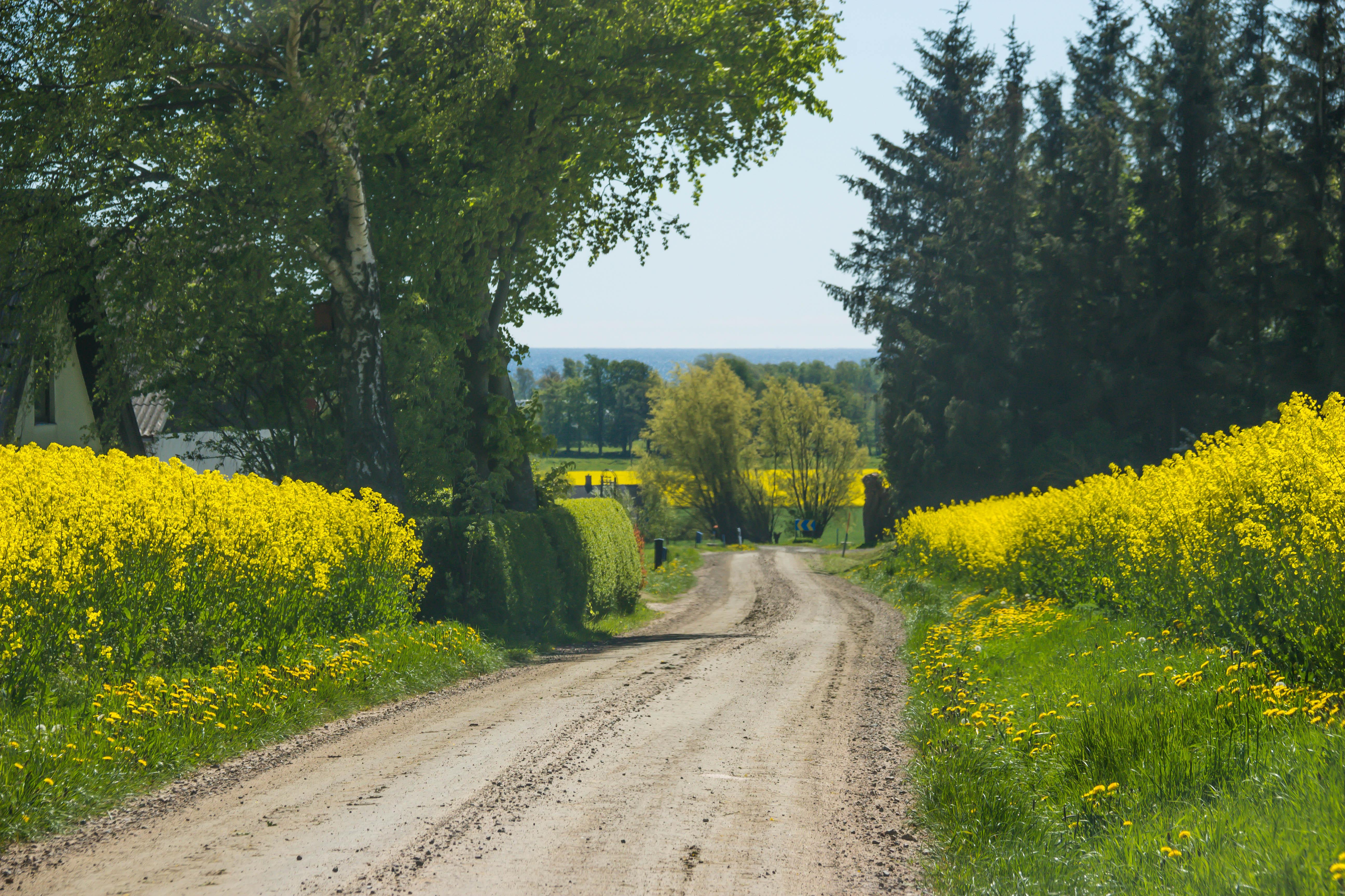 fond d 39 cran paysage colline la nature herbe champ route vert jaune colza arbre l. Black Bedroom Furniture Sets. Home Design Ideas
