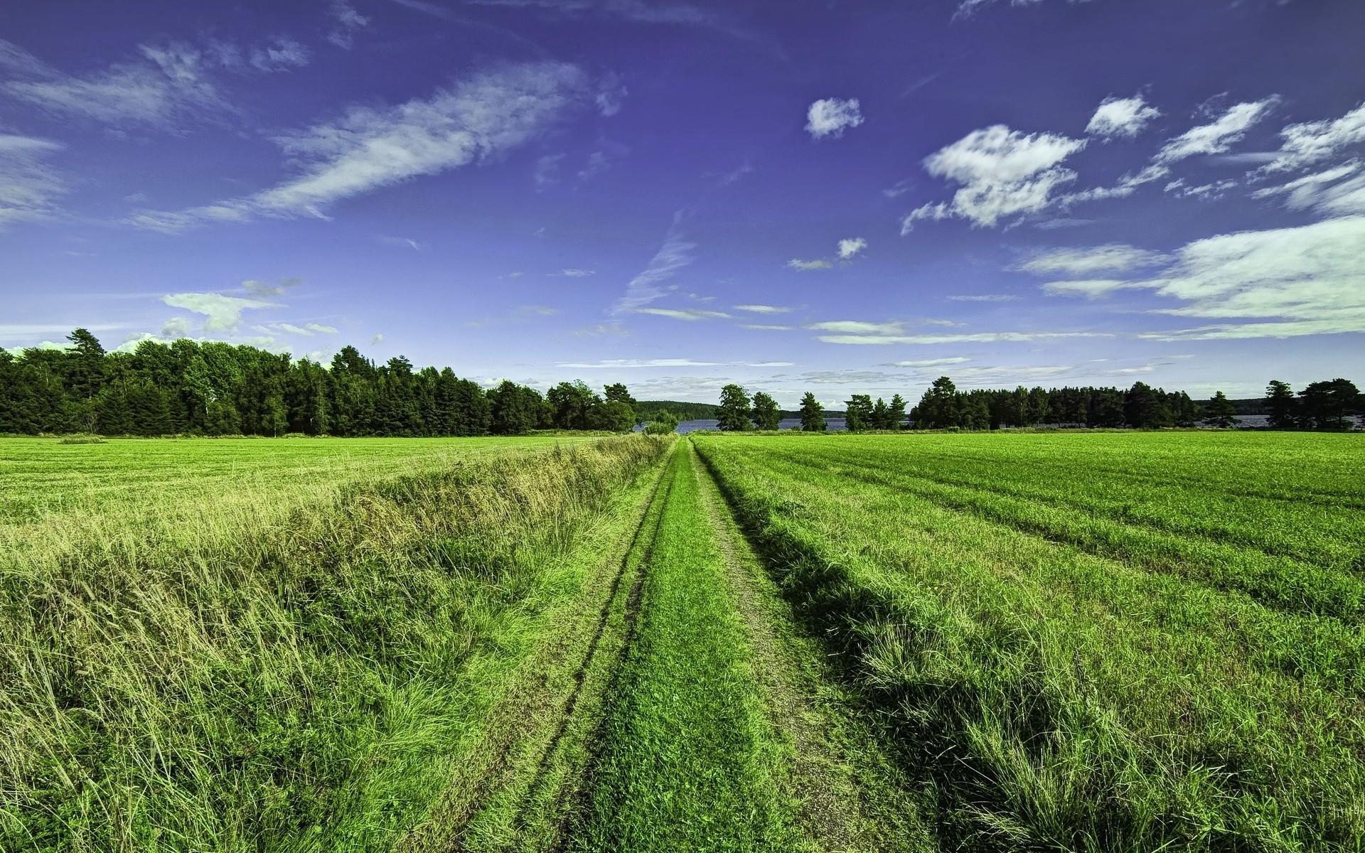 возбраняется зеленый лес зеленое поле картинки включает себя остекление