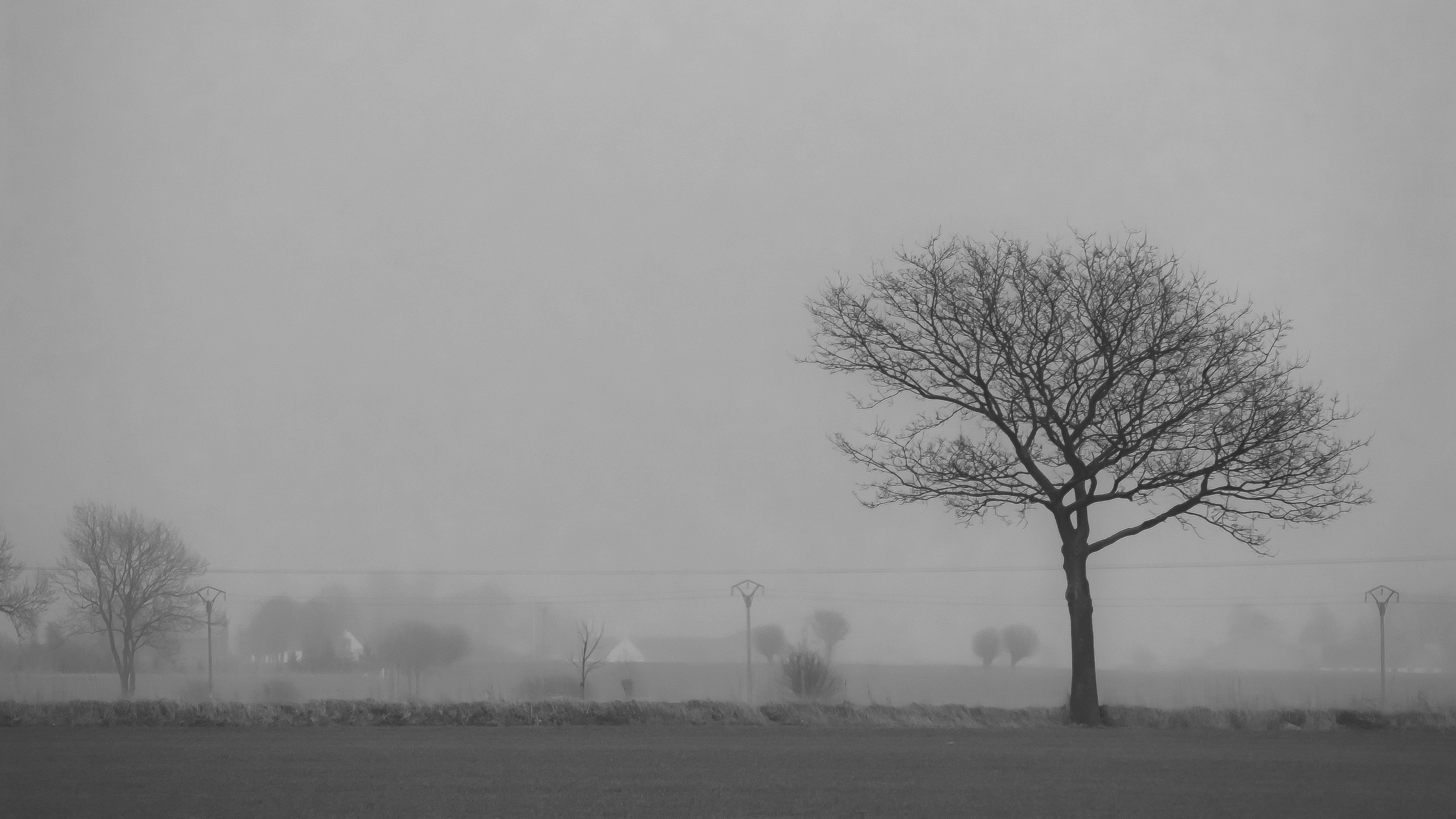 Landscape Monochrome Snow Winter Morning Mist Atmosphere Freezing Haze Tree Fog Weather Dawn Season Tr D