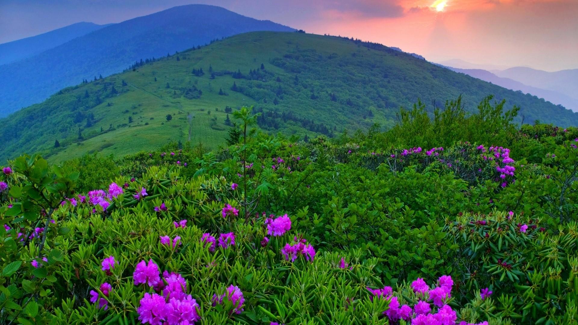 Must see Wallpaper Mountain Flower - landscape-mountains-flowers-field-wilderness-purple-flowers-plateau-mountain-flower-grassland-plant-flora-pasture-vegetation-meadow-wildflower-prairie-habitat-natural-environment-mountainous-landforms-ecosystem-shrub-mountain-range-185189  Snapshot_303771.jpg