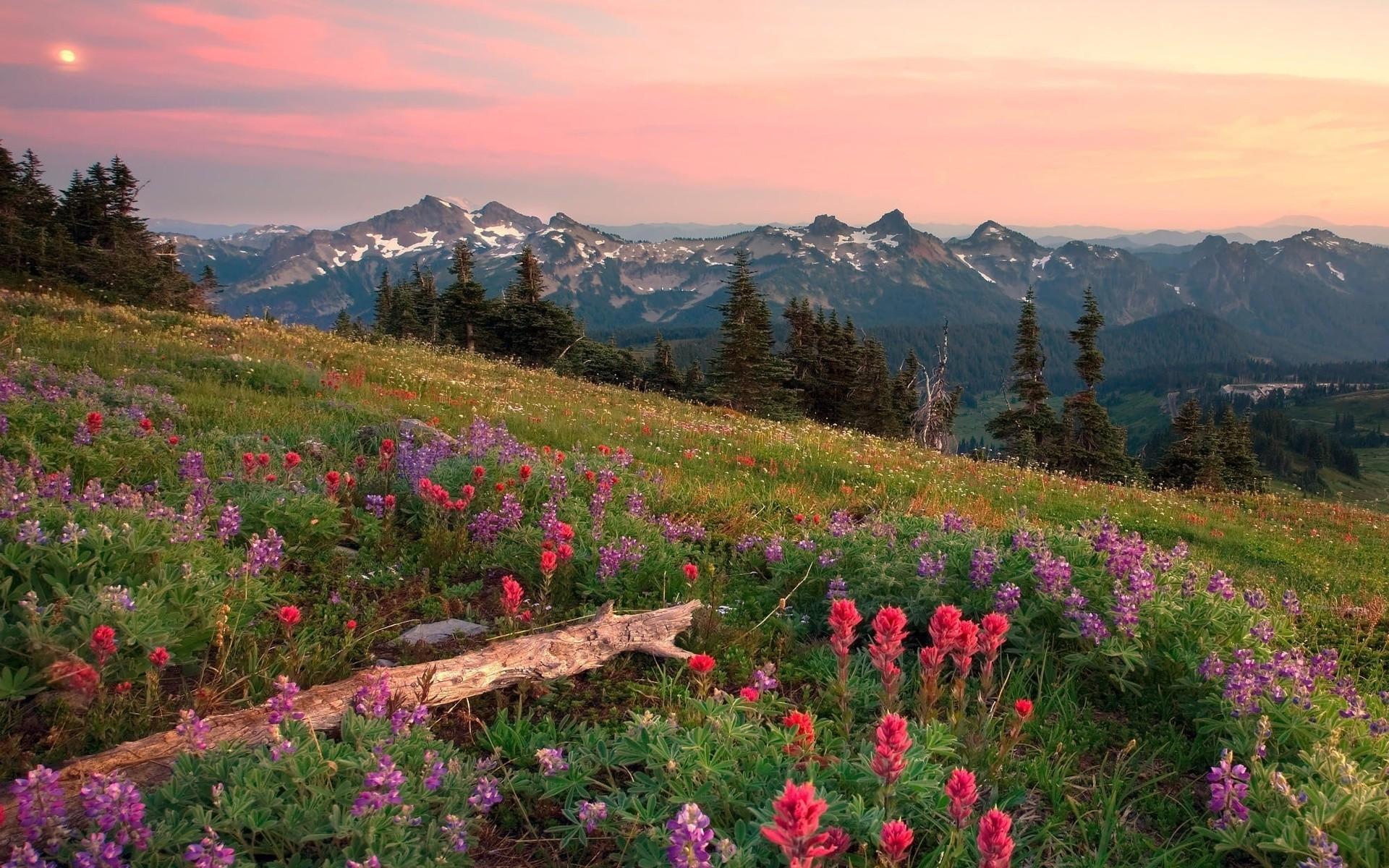 Wallpaper : landscape, mountains, flowers, hill, nature, grass, sky, field, clouds, valley, wilderness, Alps, plateau, ridge, autumn, flower, grassland, ...