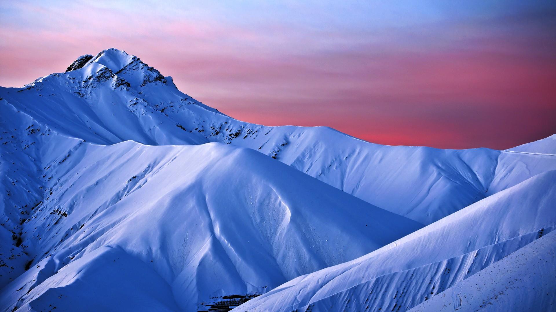 the mountain bluebird essay