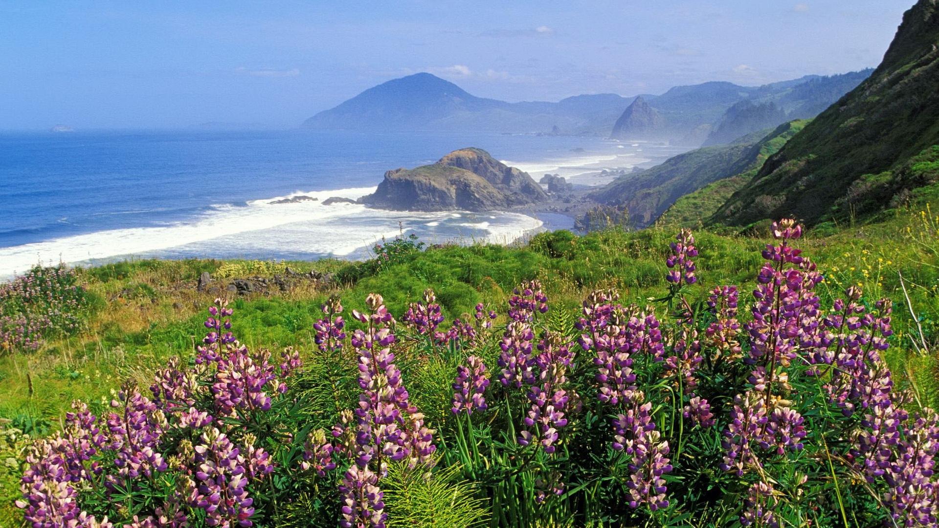 wallpaper   landscape  mountains  sea  flowers  bay  sky