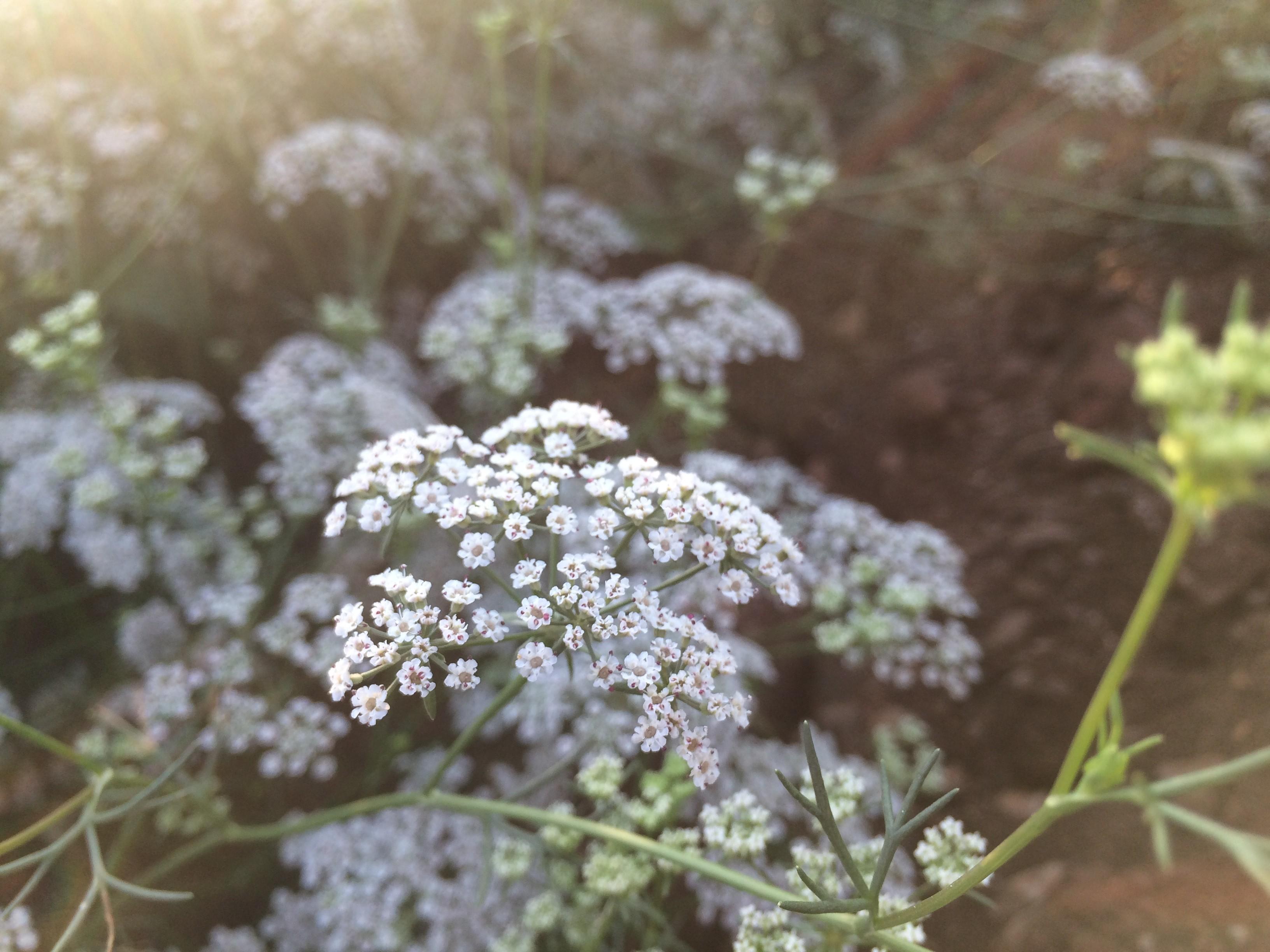 Fondos De Pantalla Paisaje Naturaleza Rama Flores Blancas