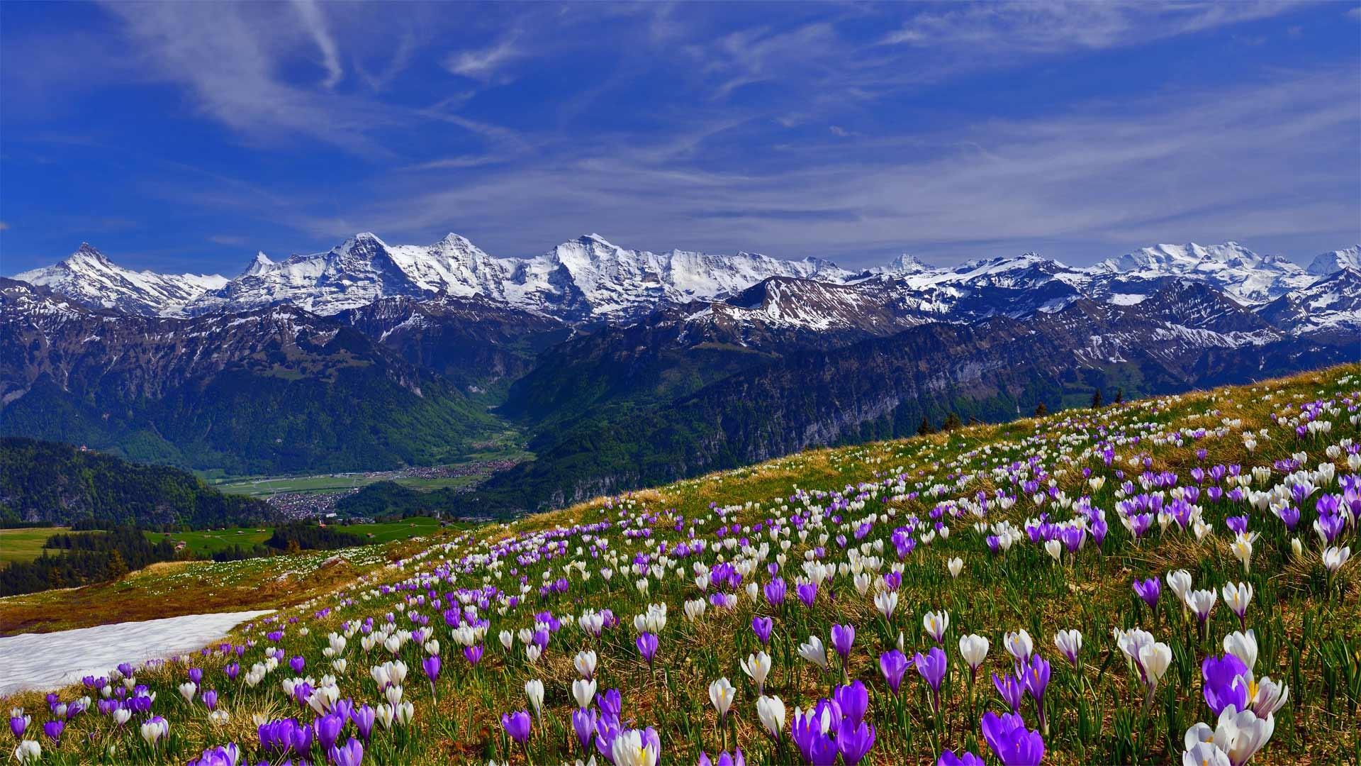 цветущие горы картинка русский народный