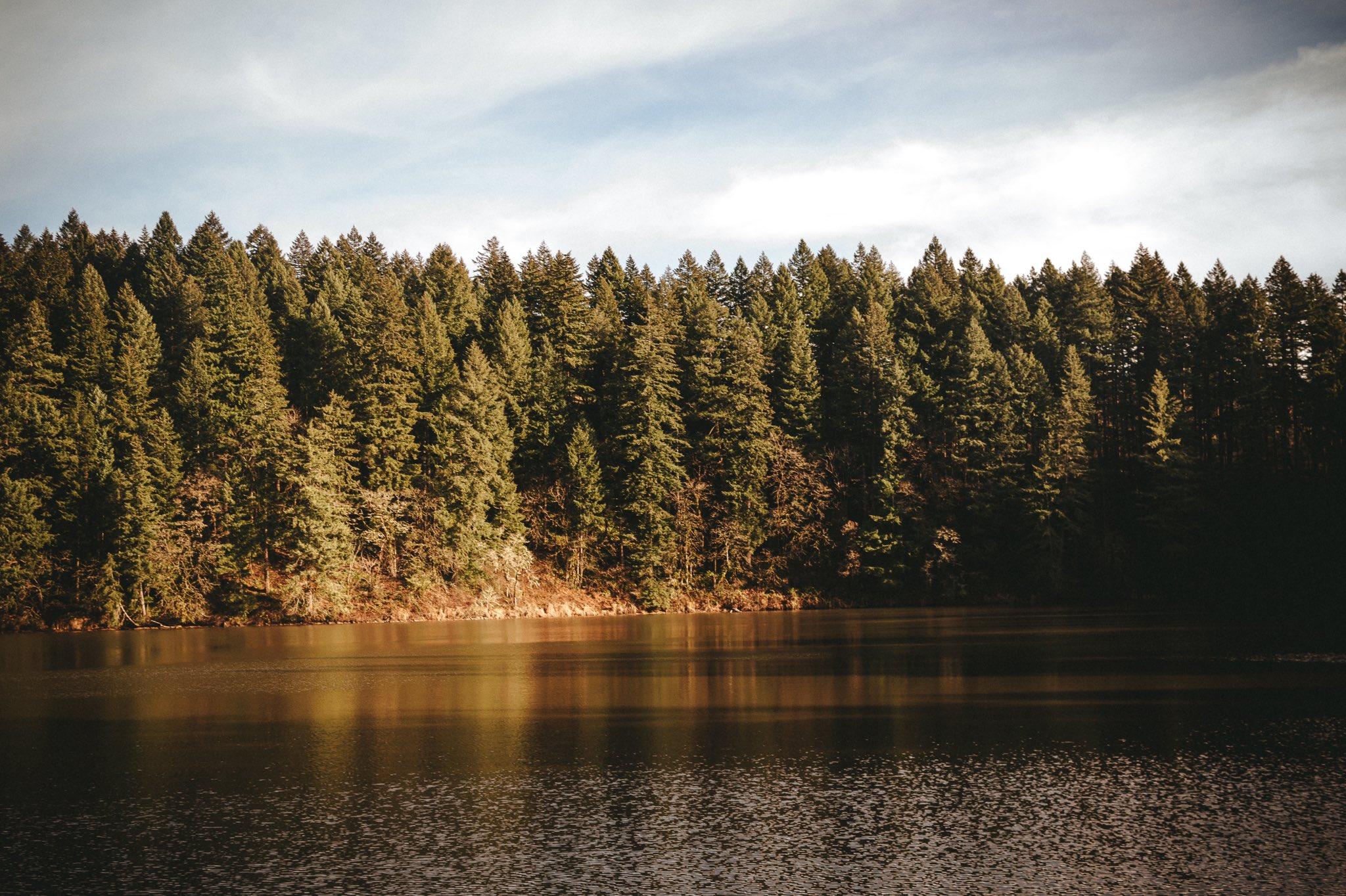 Wallpaper Pemandangan Alam Hutan Pohon Pinus Danau 2048x1364 Sisko1701 1987193 Hd Wallpapers Wallhere