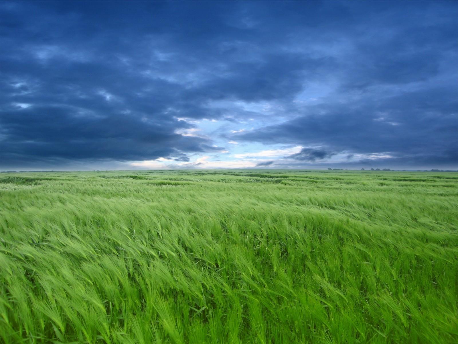 Картинки трава поле