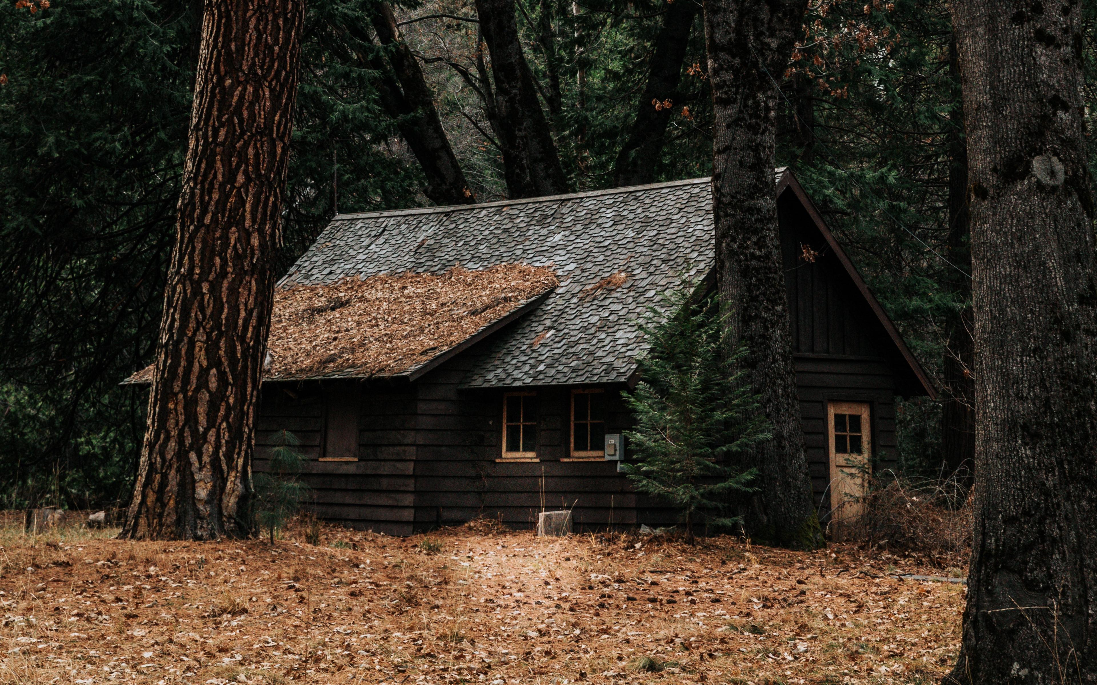 информация дом в чаще леса картинка говорю