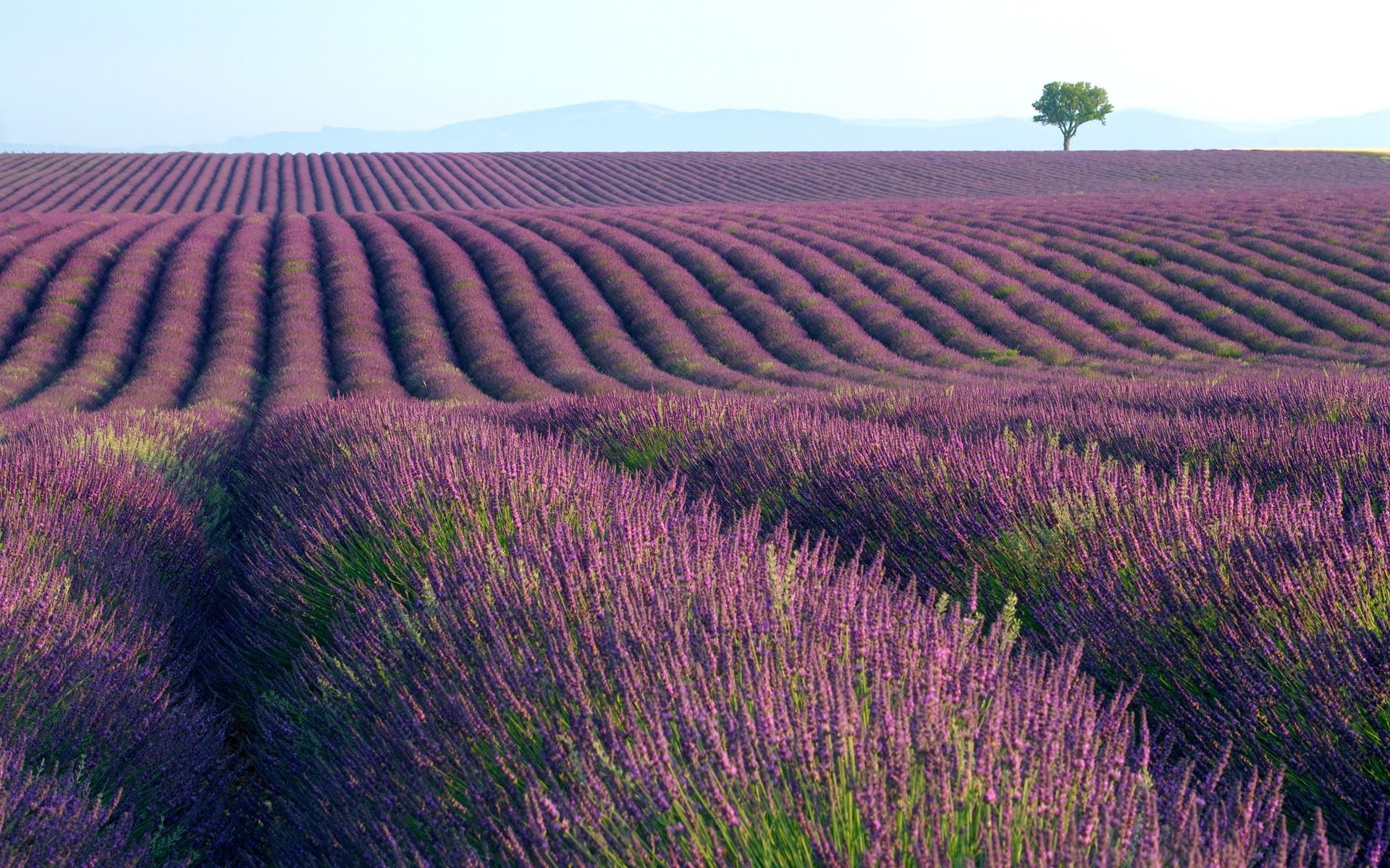 Fondos de pantalla paisaje naturaleza plantas campo for Tierra suelo wallpaper