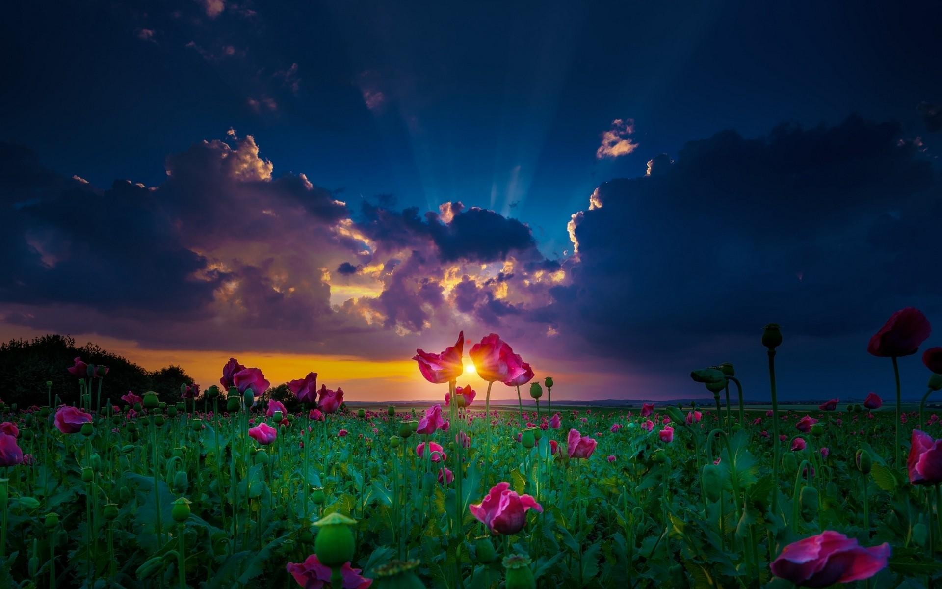 картинки красивая природа цветы небо все человеческие