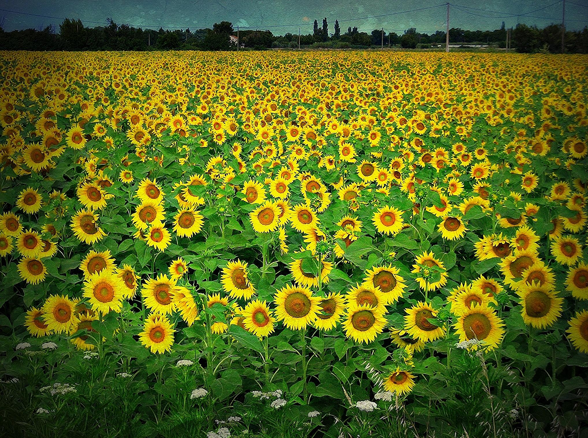 Hintergrundbilder : Landschaft, Natur, Himmel, Pflanzen, Feld ...