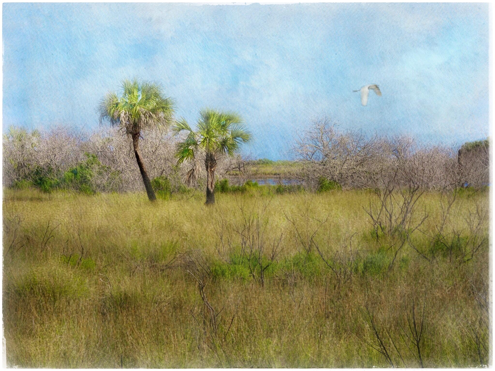 Fond Décran Paysage La Peinture Herbe Ciel Champ Faune île