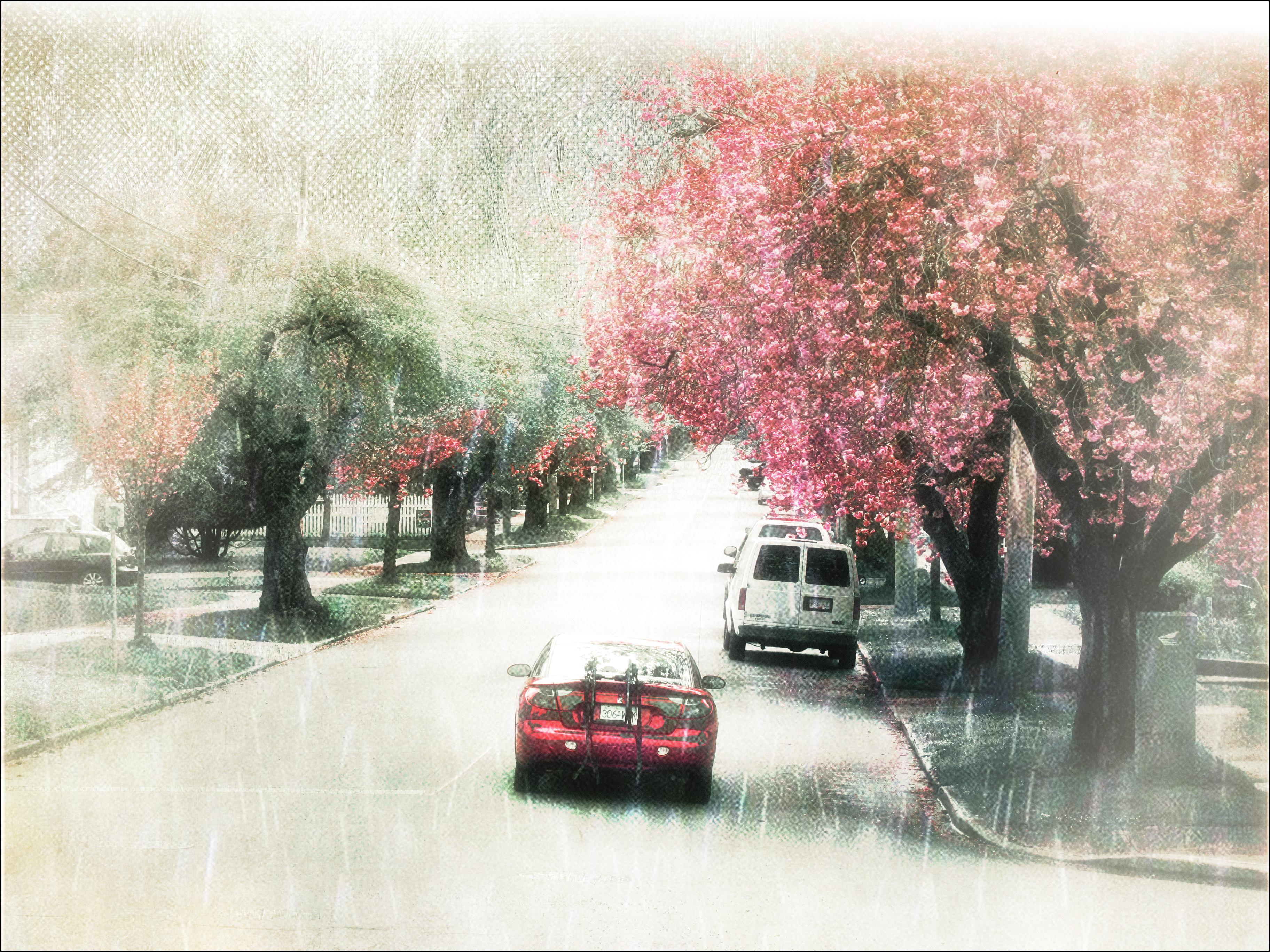 Masaüstü Manzara Boyama Kış şube Kiraz çiçeği çiçeği Pembe