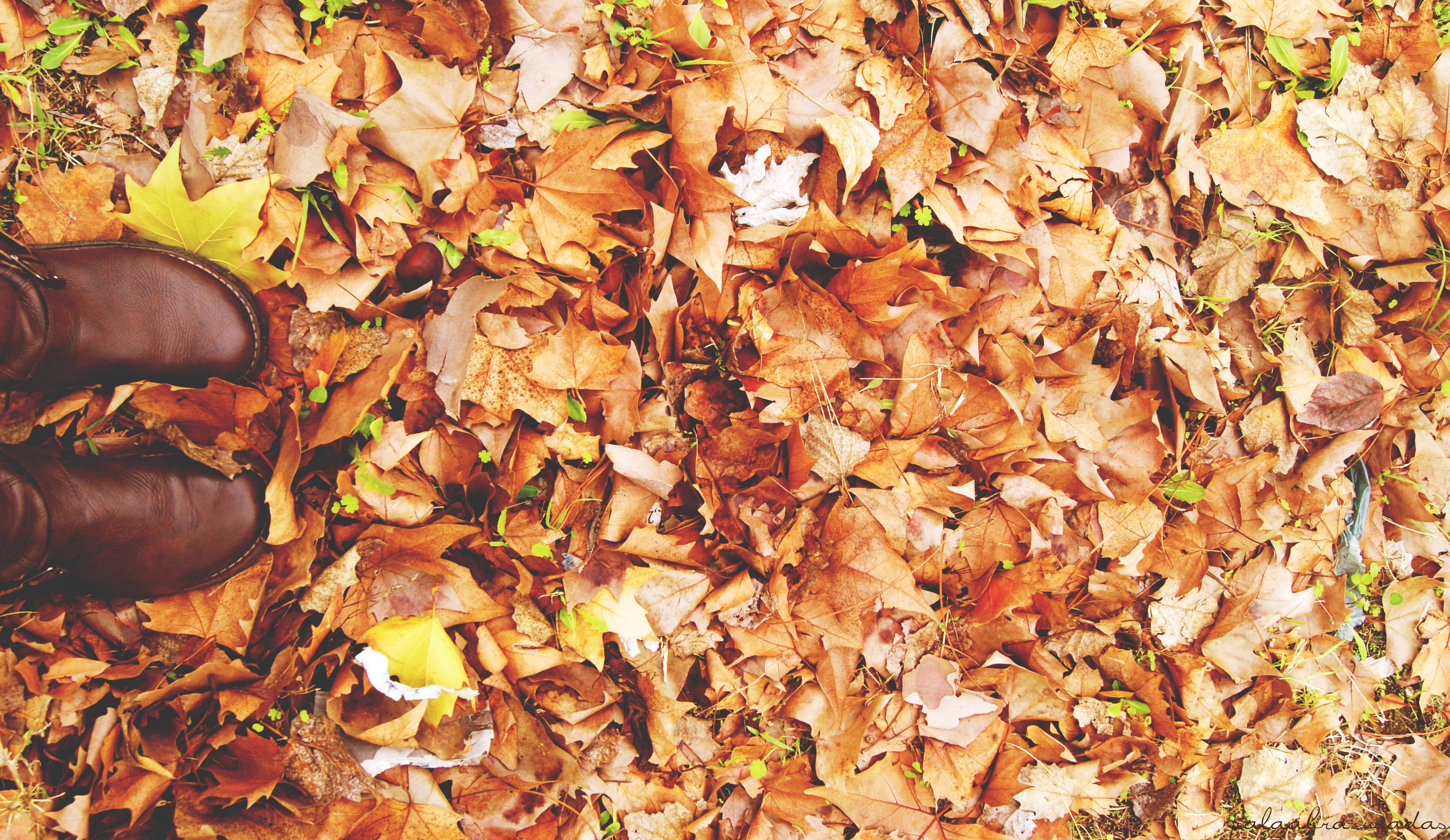 можно пяточки в осенней листве картинки последнее