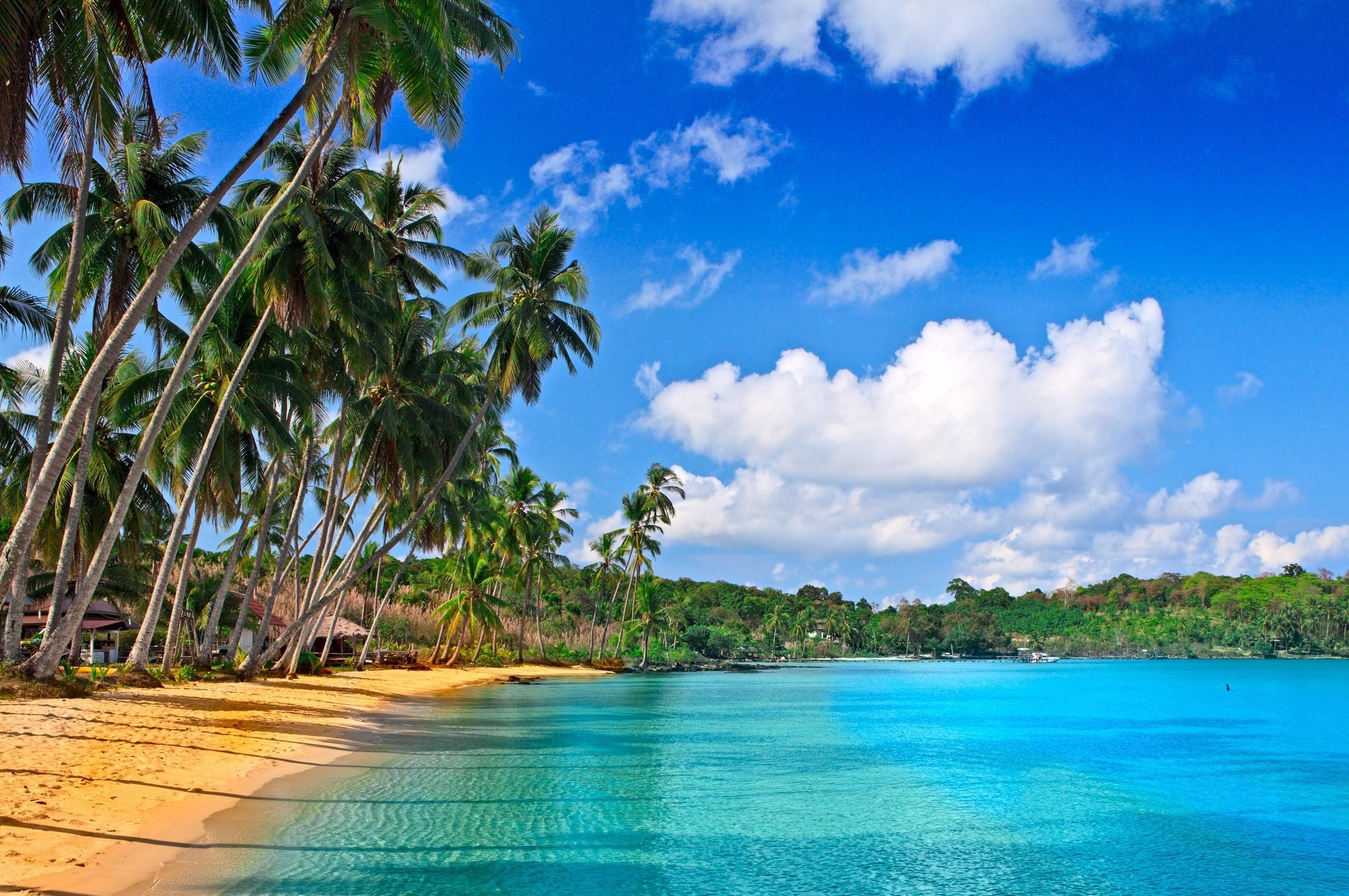 обои на рабочий стол море пальмы песок в высоком качестве № 2029  скачать