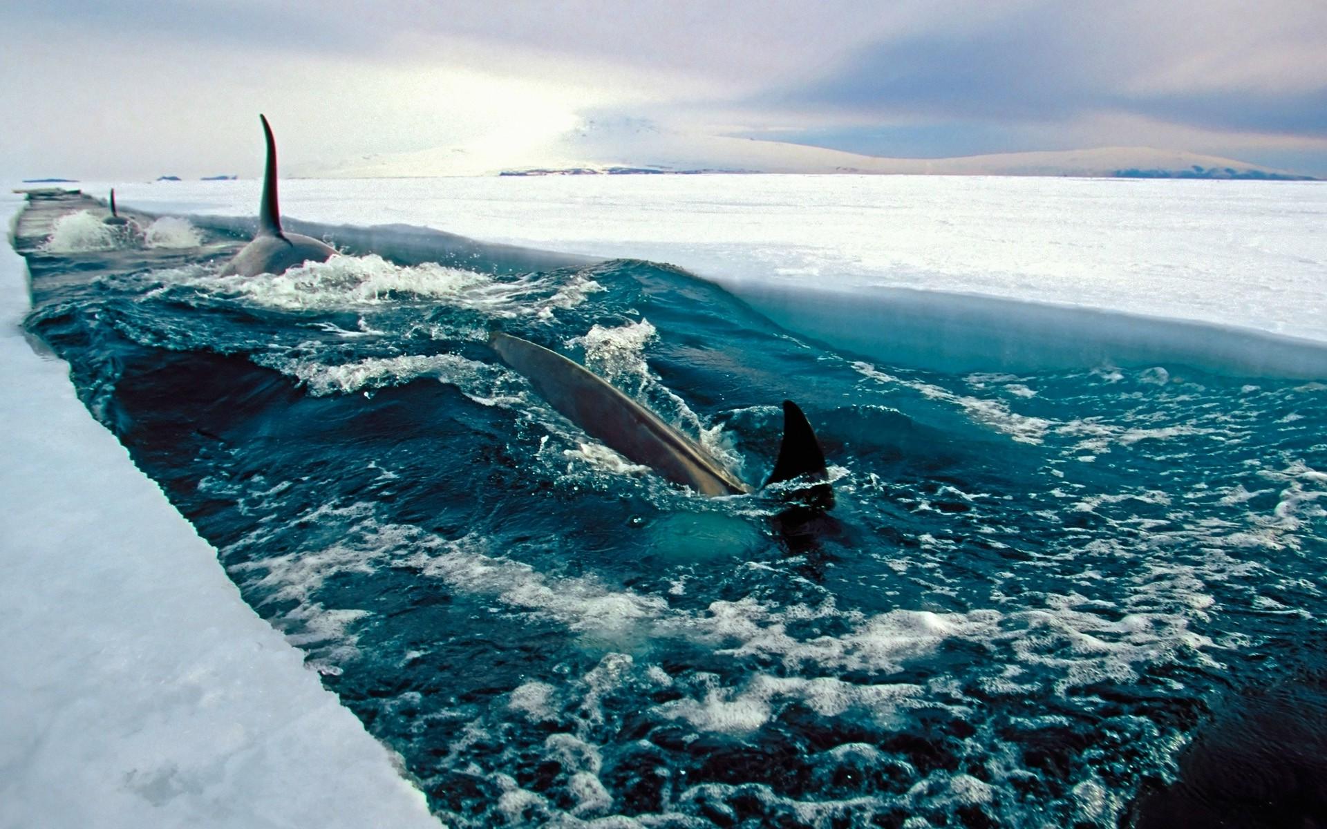 Wallpaper Landscape Water Nature Sky Fish Antarctica