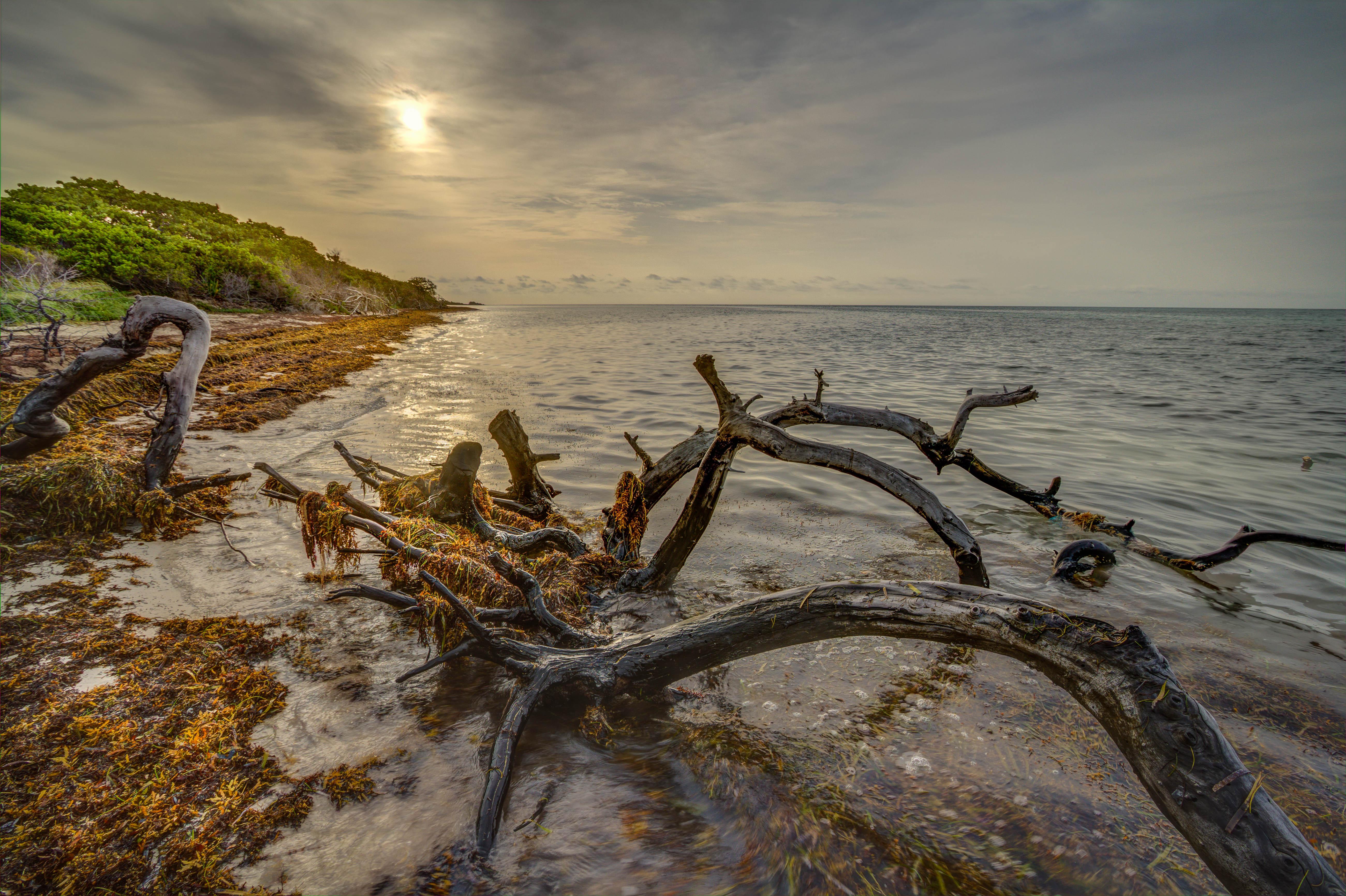 Wallpaper Landscape Sea Water Shore Sky Beach Wood