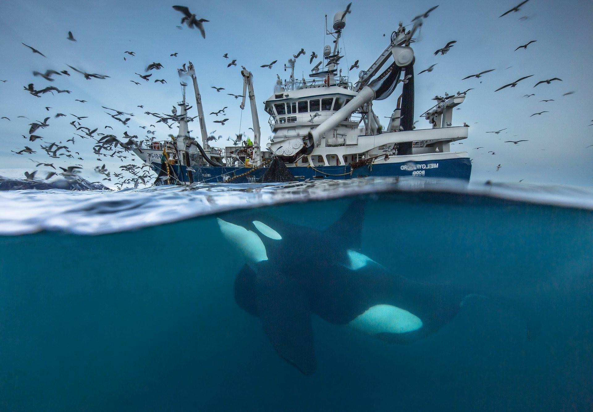 Wallpaper Landscape Ship Birds Animals Sea Water Nature