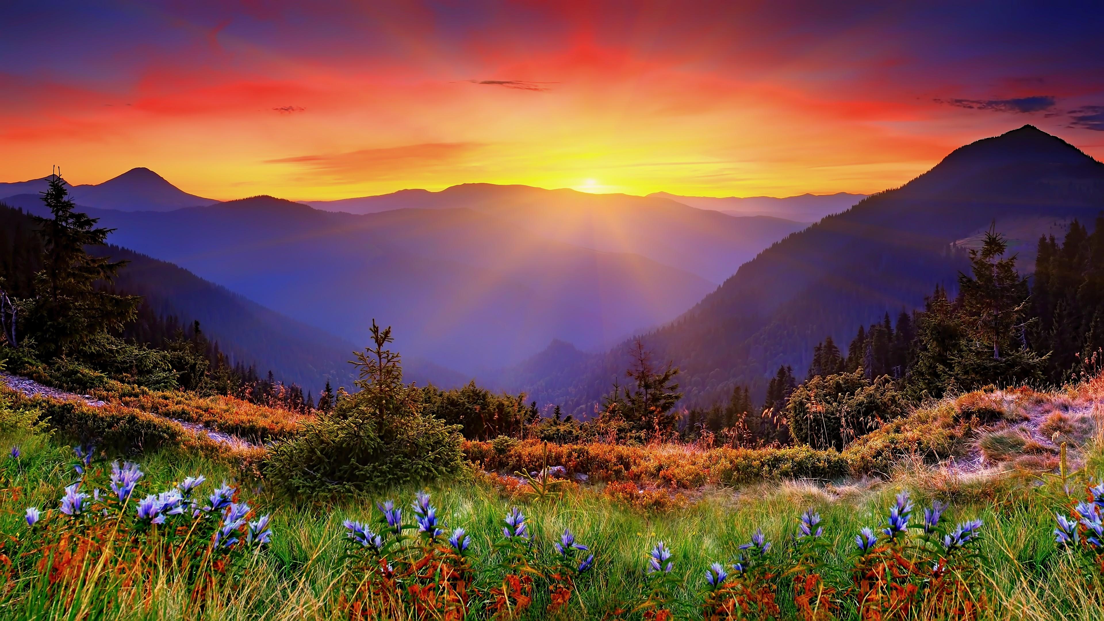 Nature - HD2500×1406