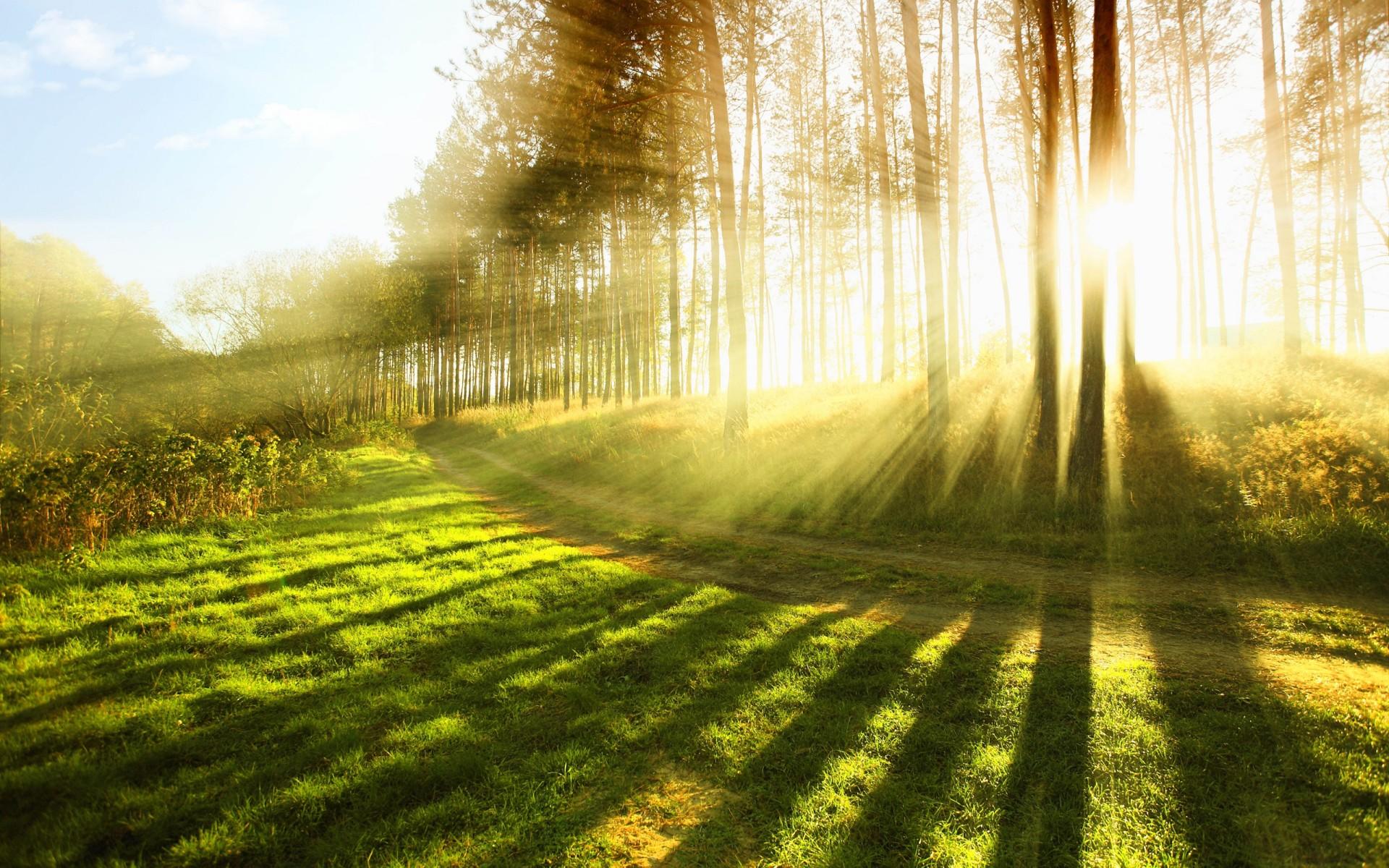 Wallpaper : pemandangan, pohon, bidang, matahari terbit 1920x1200