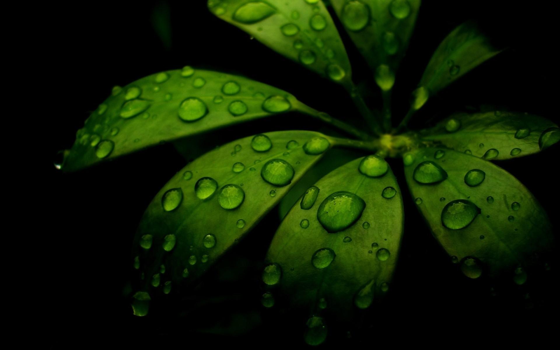 Wallpaper Leaf Green Black Carved 1920x1200 4kwallpaper