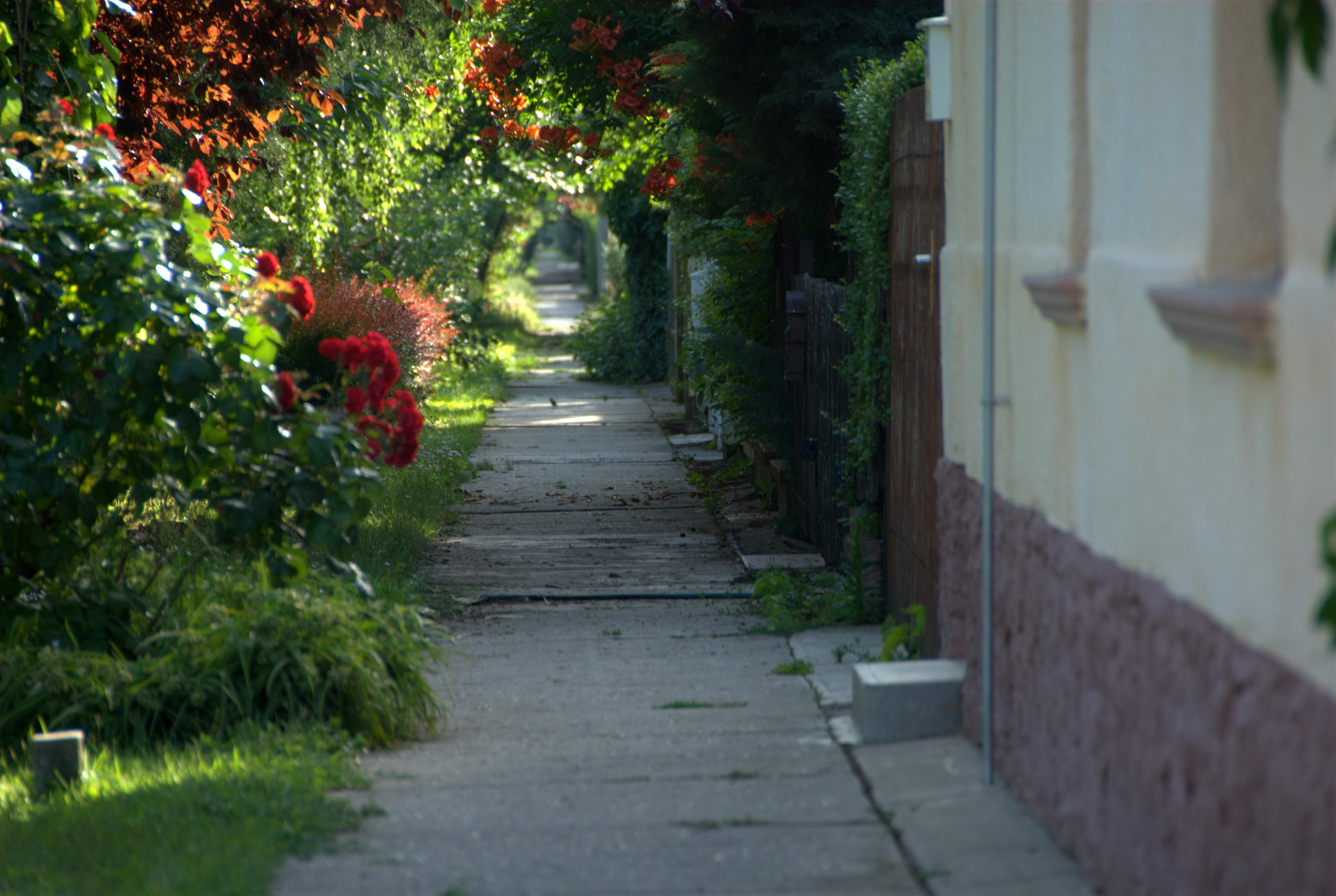 Attractive Leaf Walkway Garden Plant Path Public Space Alley Tree Flower Wall House  Road Grass Street Shrub